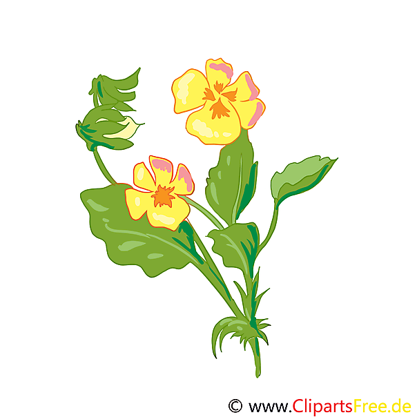 Wild viooltje afbeelding, clip art, grafisch, illustratie gratis