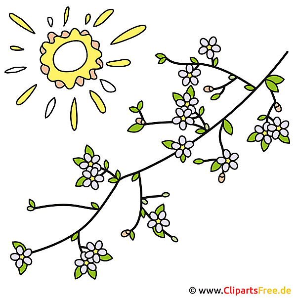 Fruehling Bild kostenlos Baumzweige mit Blumen