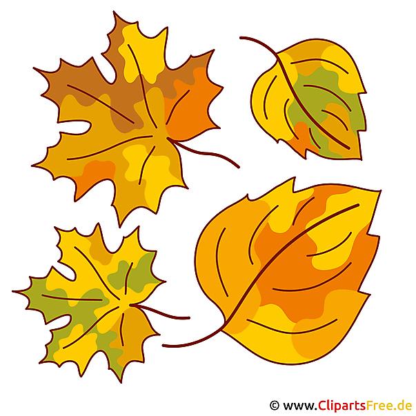葉、葉、木の葉 - 秋の写真無料
