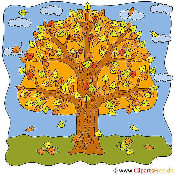 Eiche Clipart  Bilder Herbst