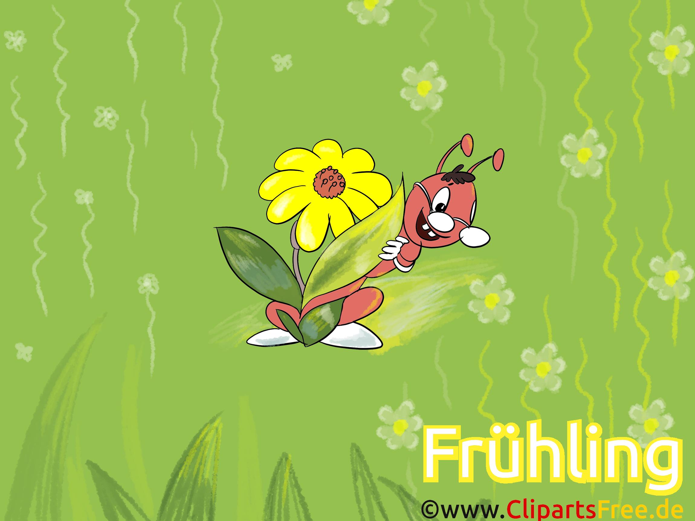 Hintergrundbilder Frühling kostenlos Insekt, Blume, Ameise, grün