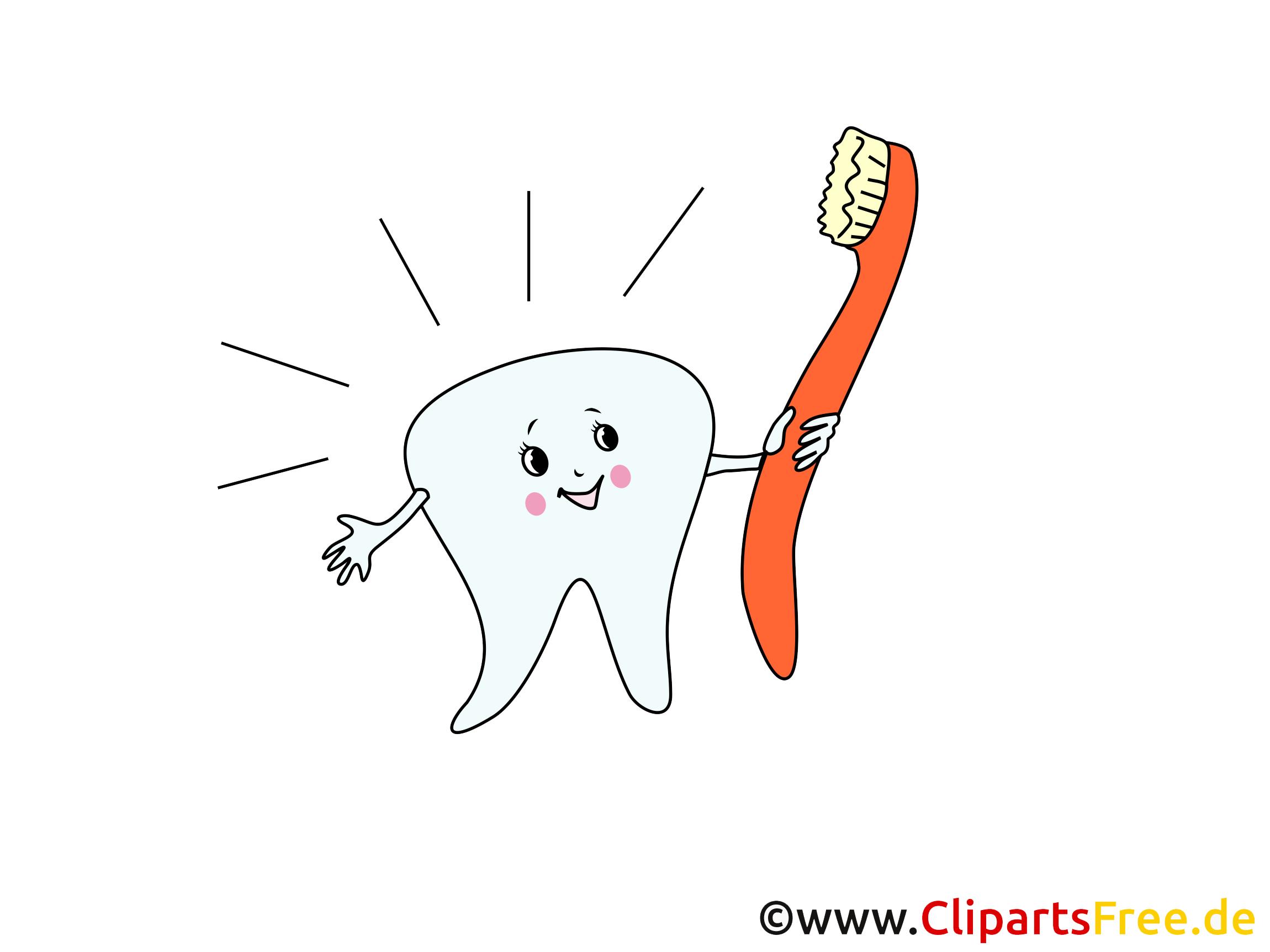 zahn und zahnbürste bilder cliparts grafiken