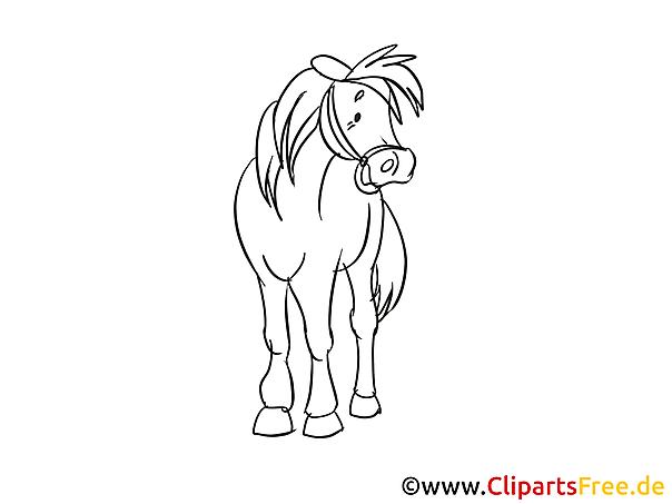 Zeichnung Pferd Schwarz Weiss