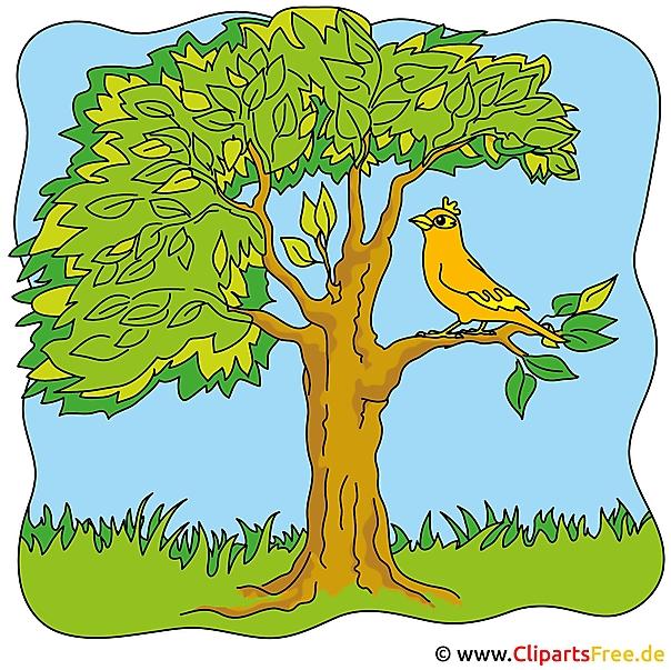 Gratis zomerse afbeeldingen - boom Clipart
