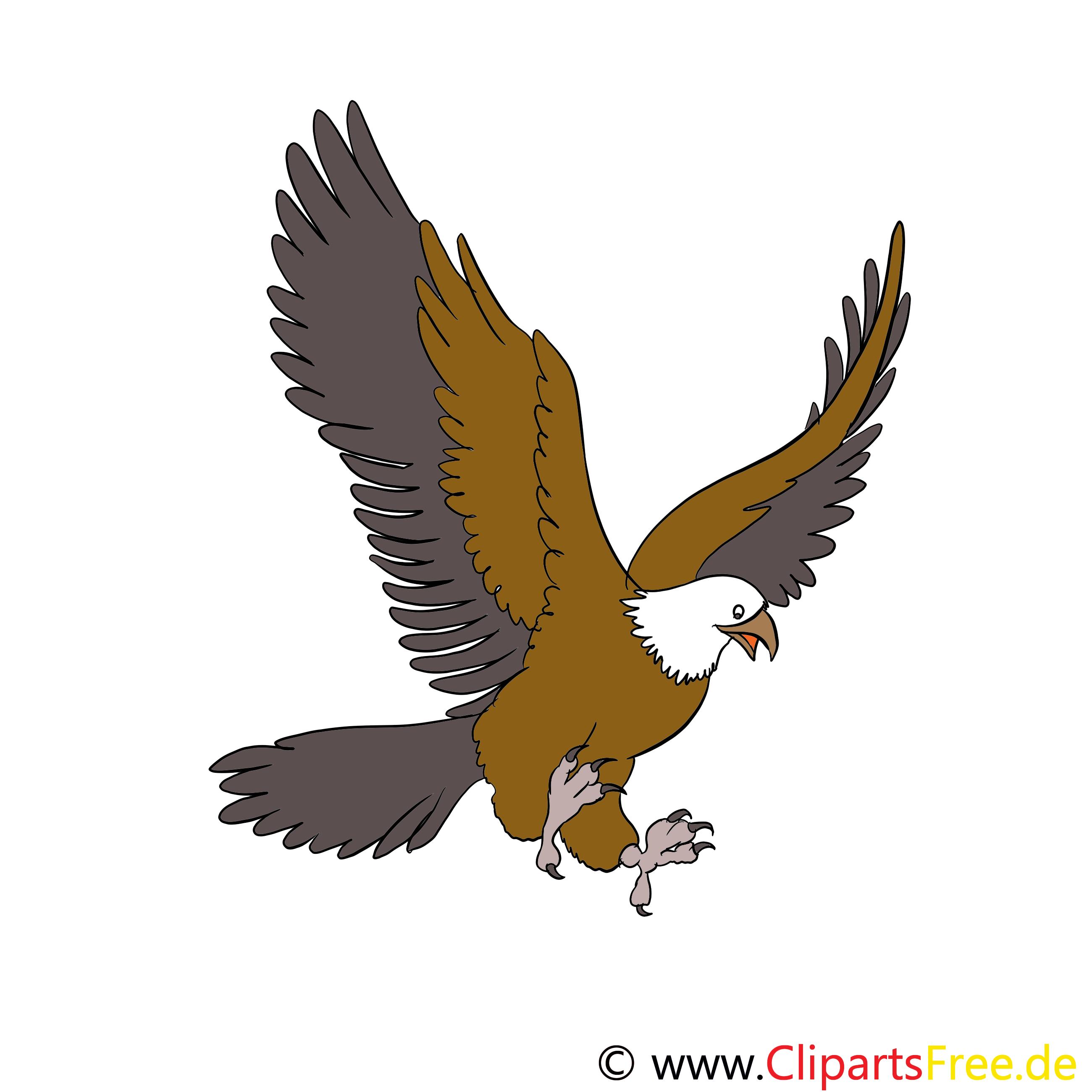Adler Cartoon, Bild, Illustration, Clip Art