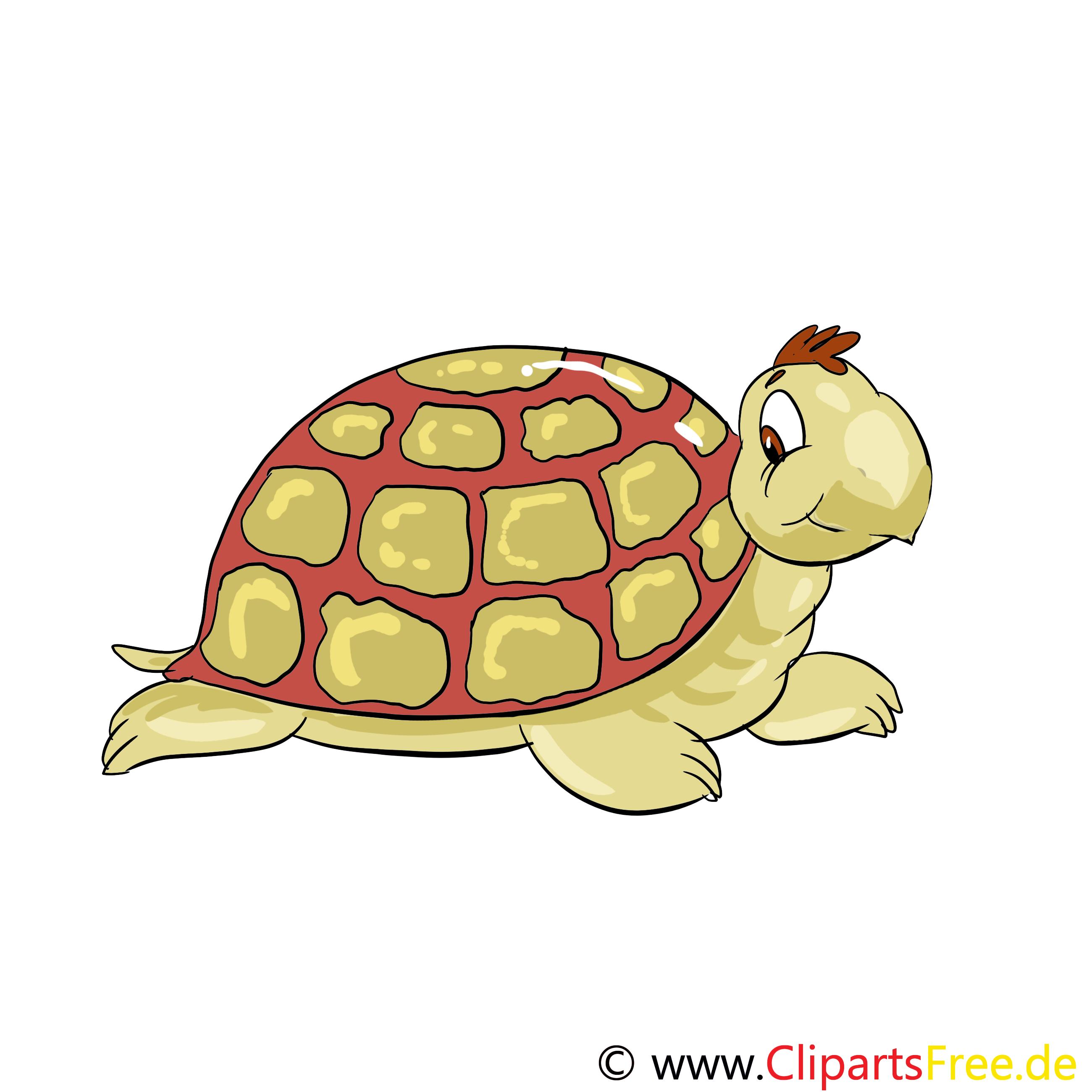 Clipart Bibliothek Tiere im Zoo - Schildkröte