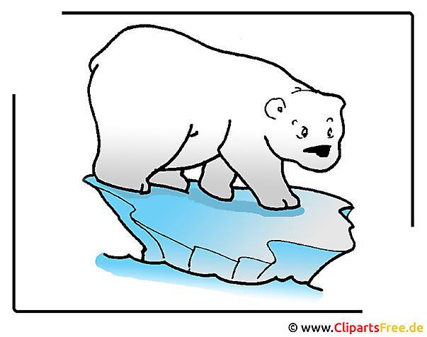 Eisbär Clipart-Bild free