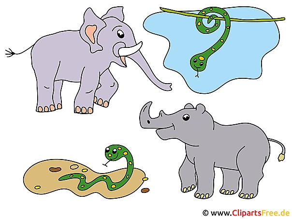Tiere Afrikas Bilder