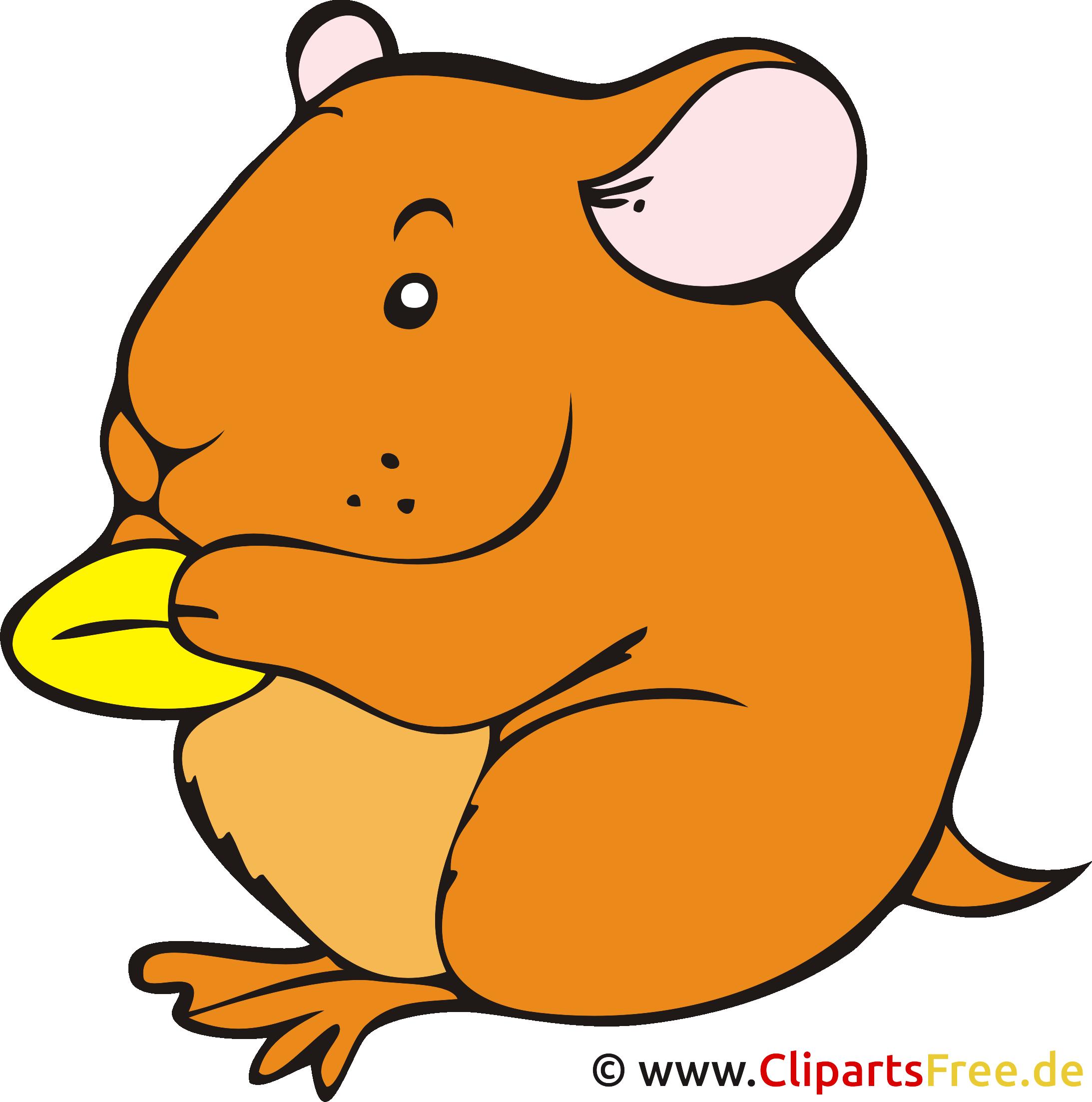 Hamster Clipart, Bild, Cartoon kostenlos