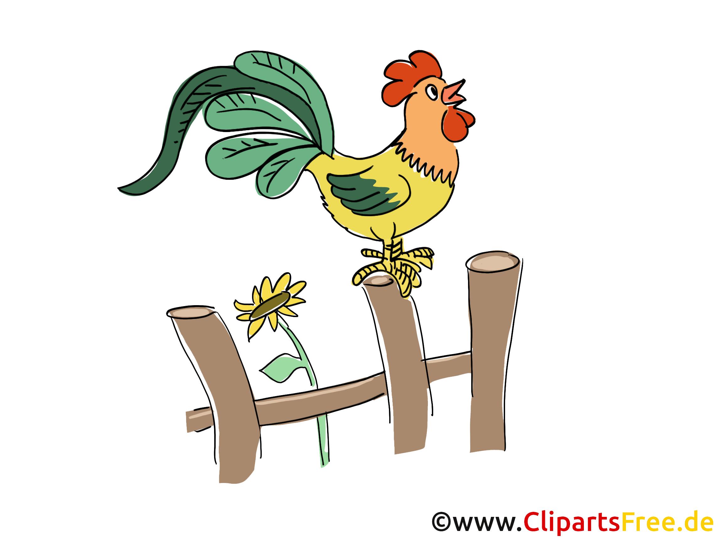 Kikeriki Bild, Clipart, Cartoon, Grafik
