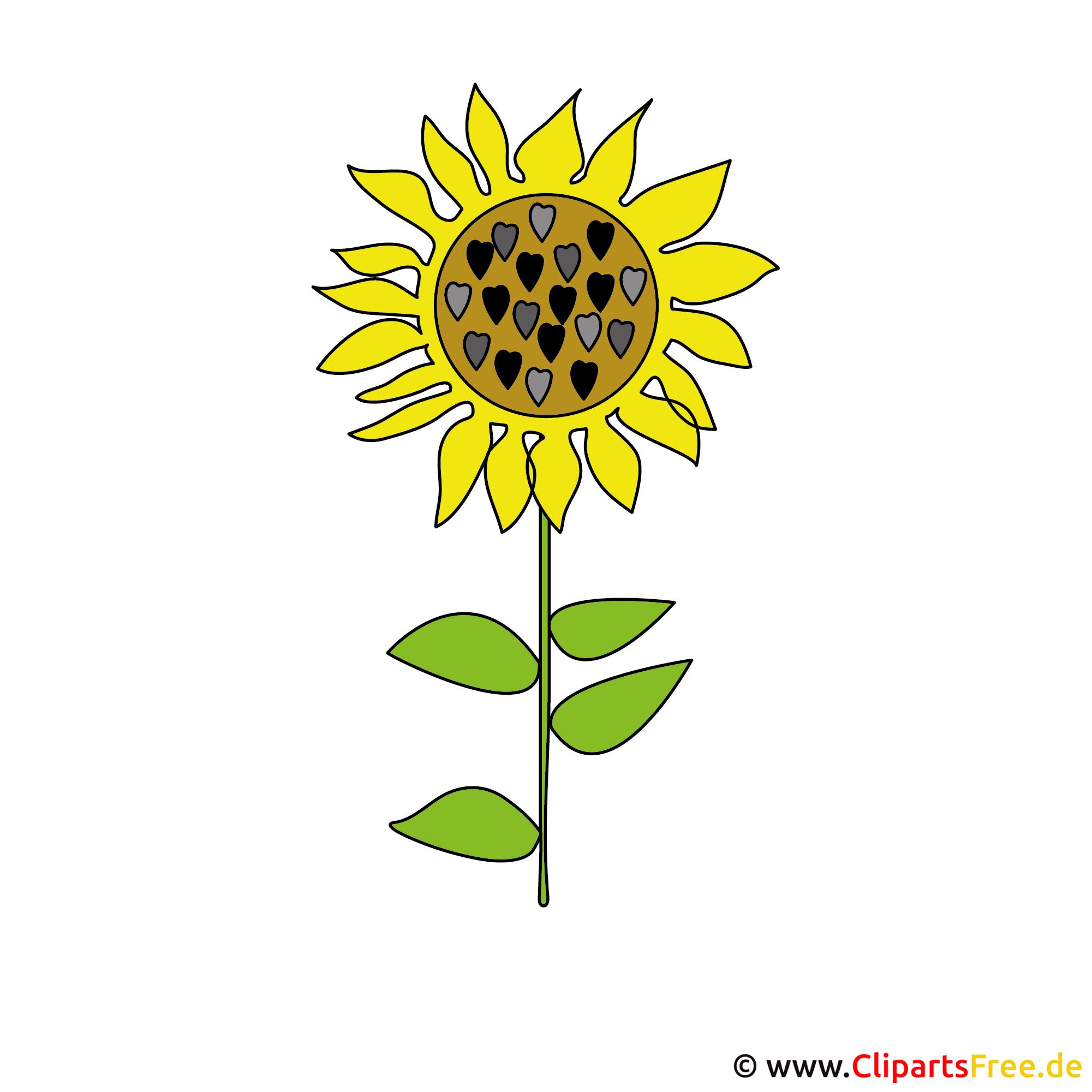 Sonnenblume Bild Clipart kostenlos