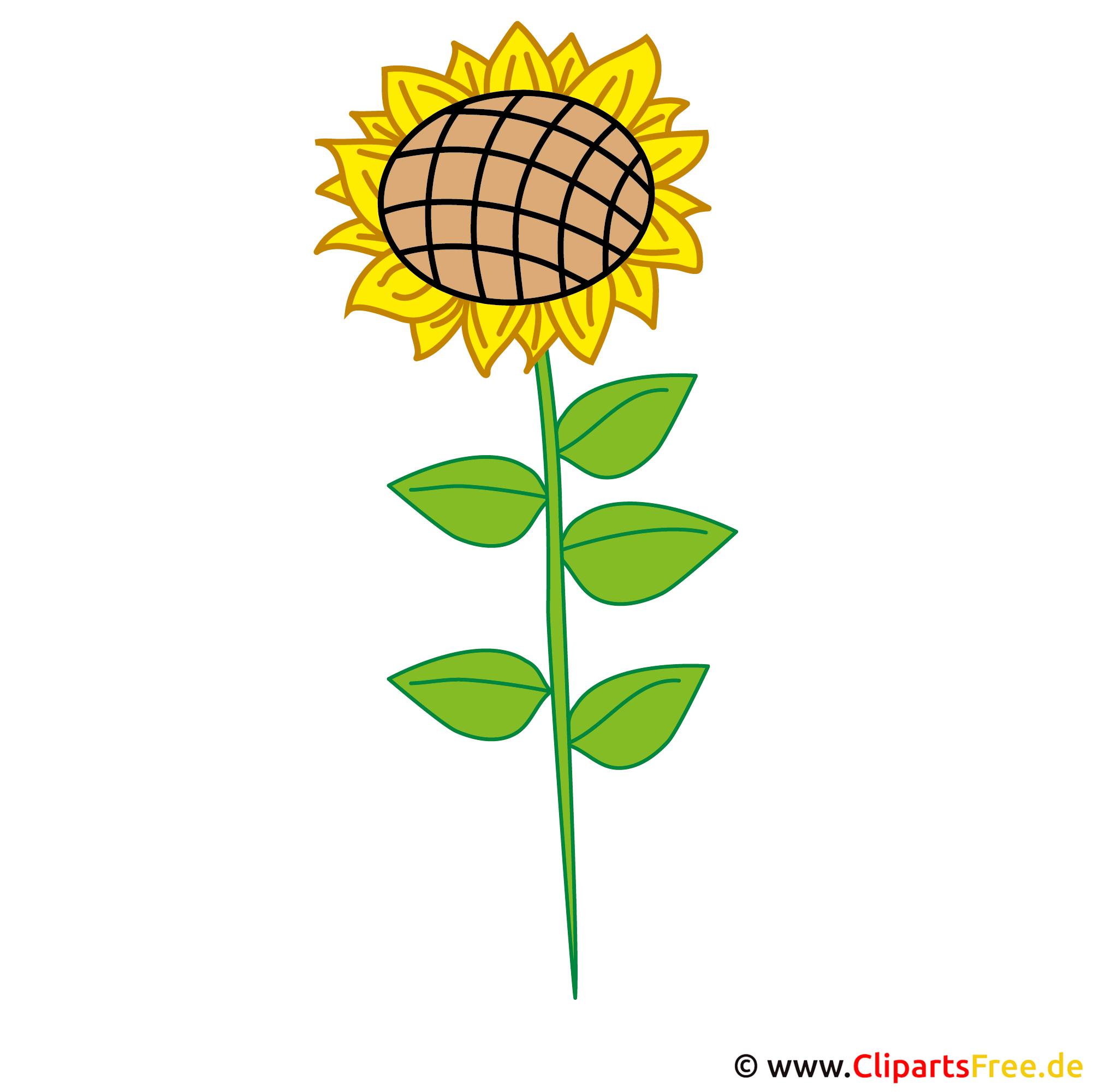 Sonnenblume Bild Gratis