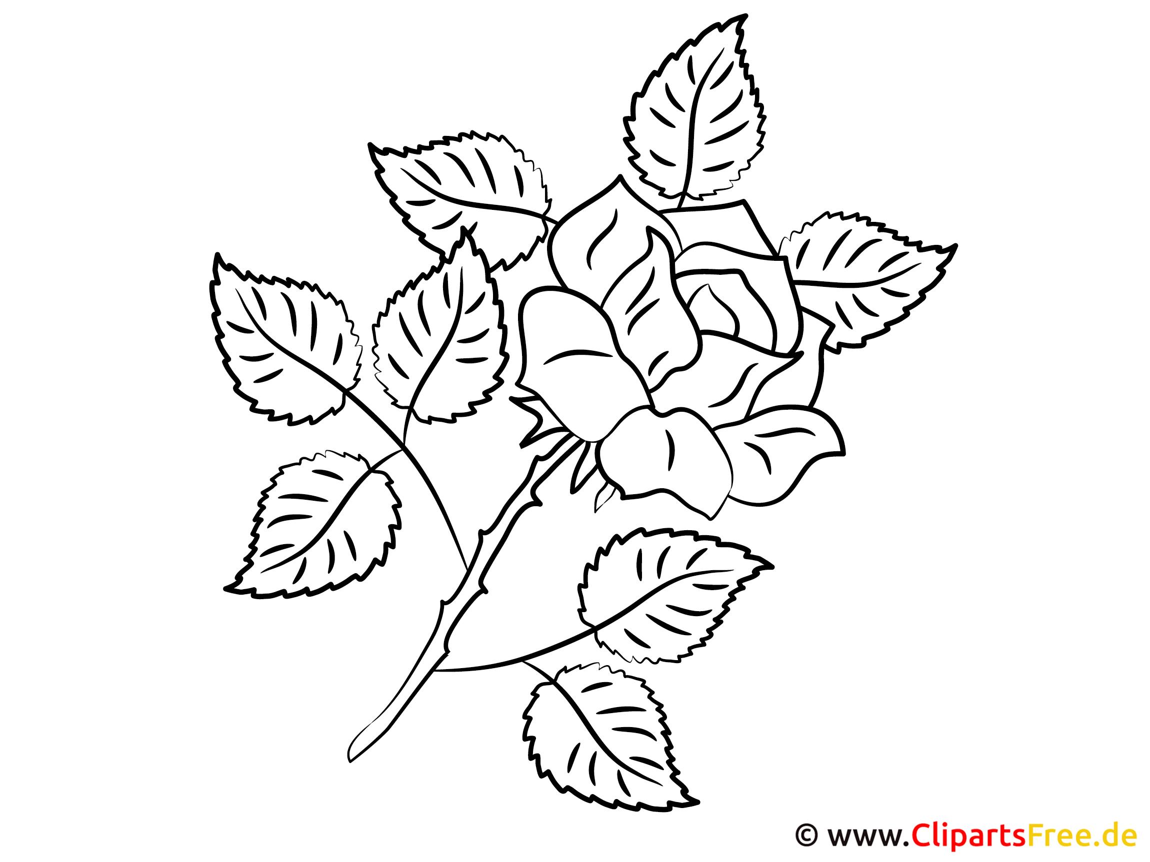 Clipart zum Ausmalen Rose