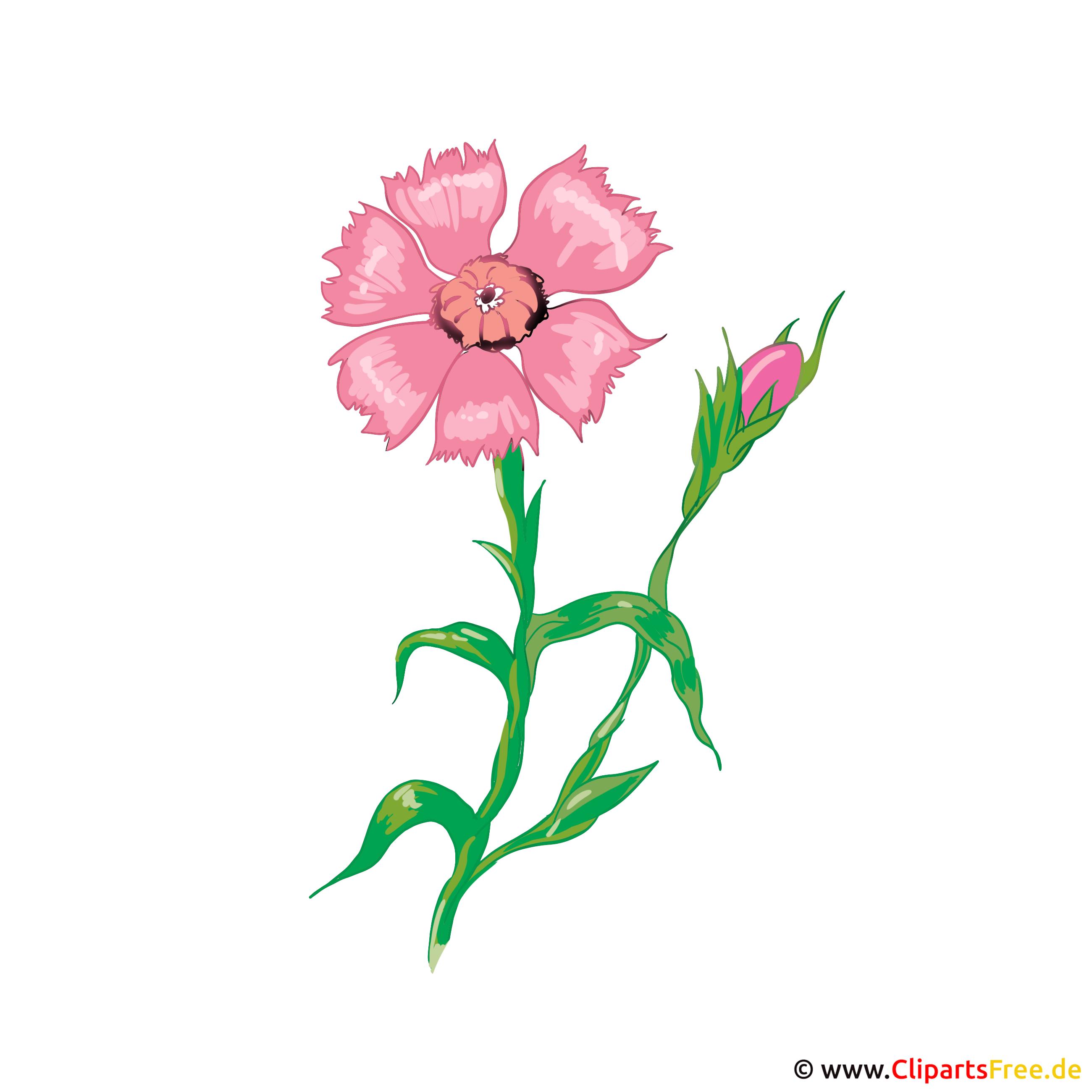 Blume Zyane Bild, Illustration, Karte