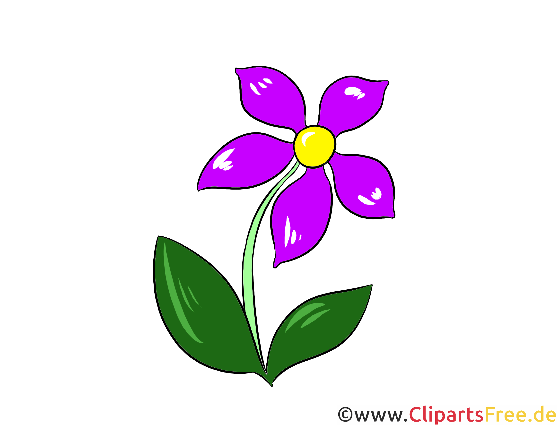 Clipart, Illustration, Bild Wiesen-Margerite