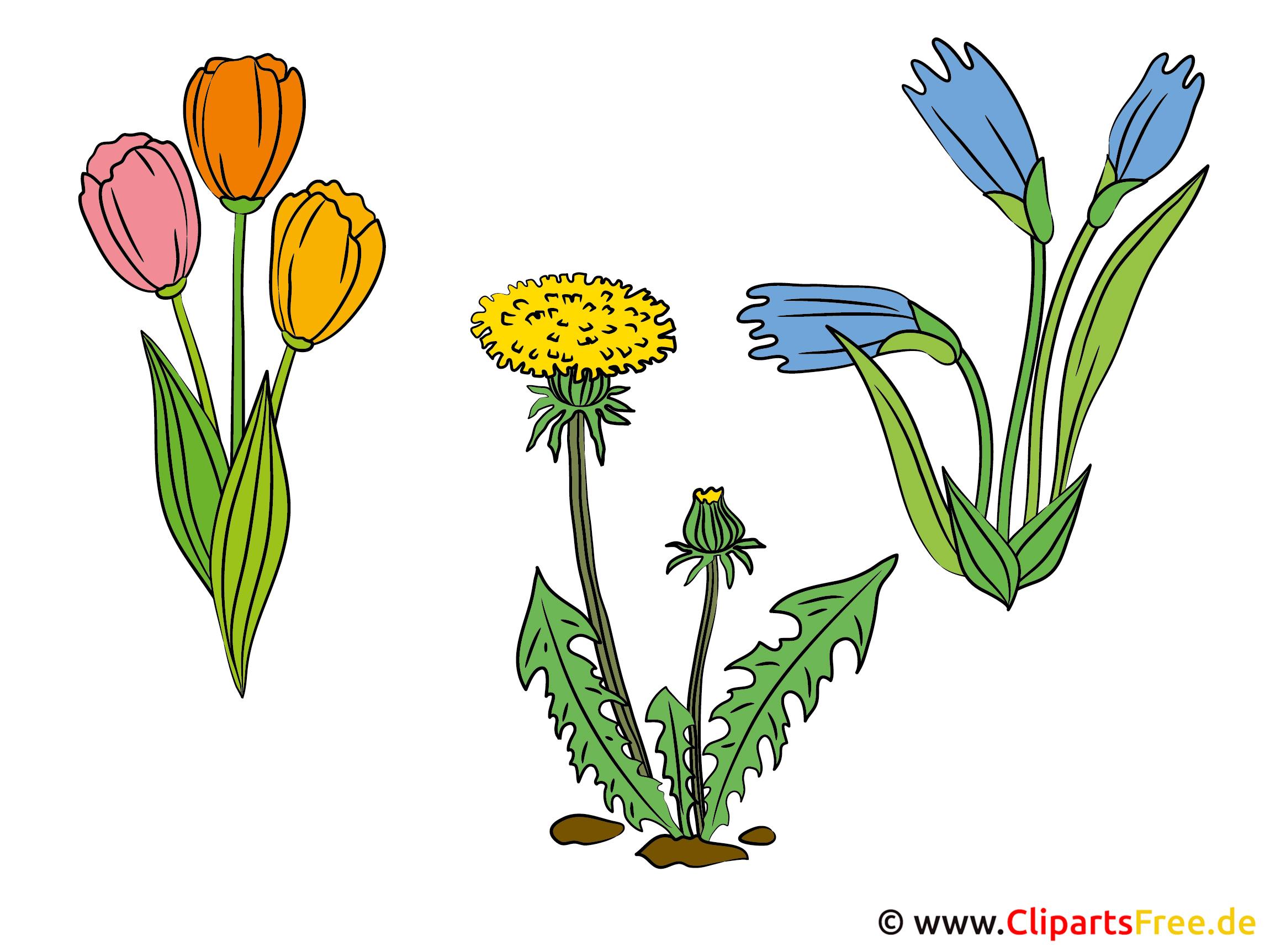 Feldblumen Bilder - Cliparts