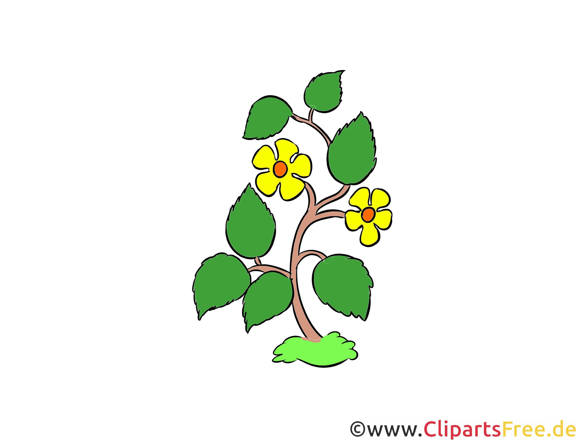 Feldblumen Clipart, Illustration, Bild kostenlos