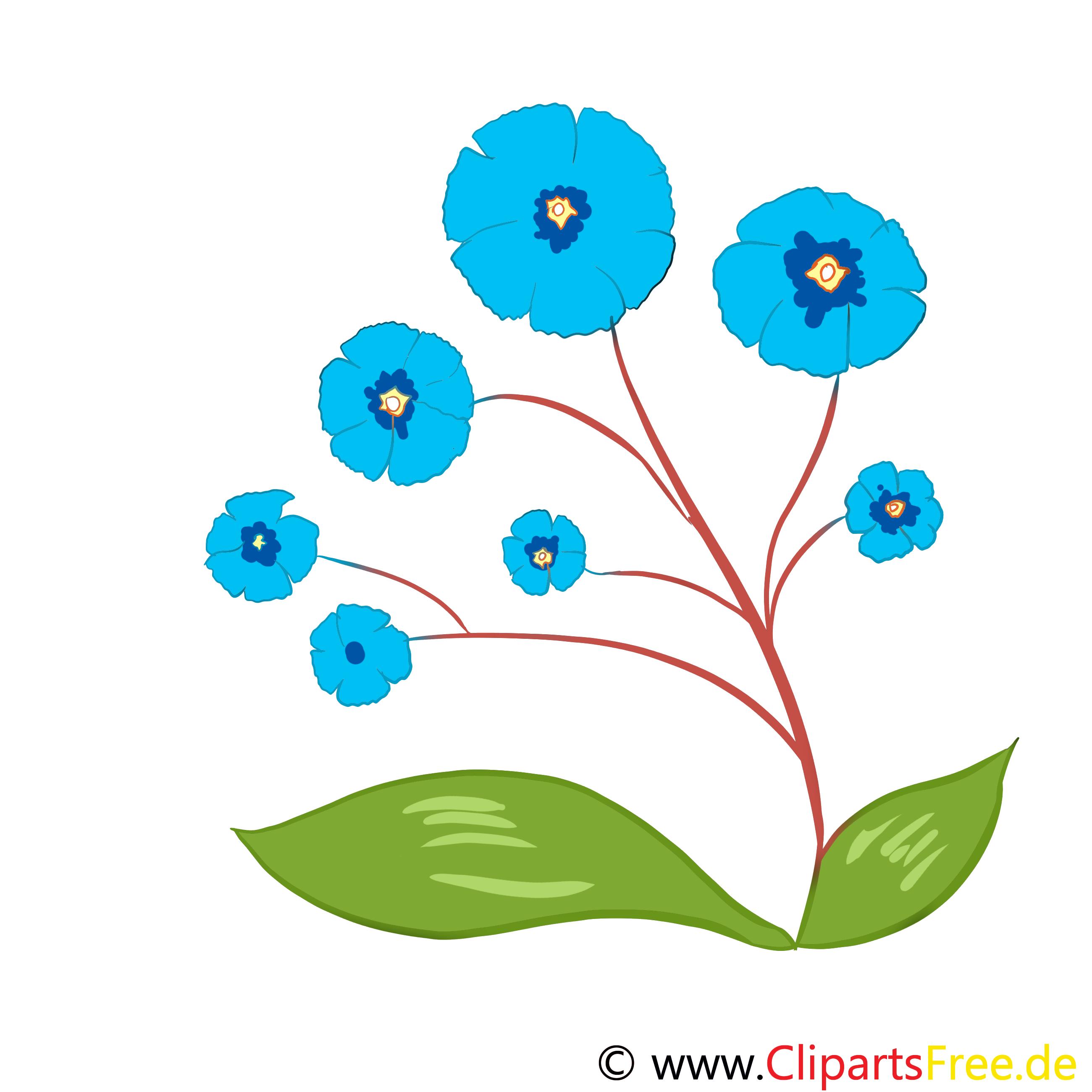 Flockenblume Bild, Clip Art, Grafik, Illustration kostenlos