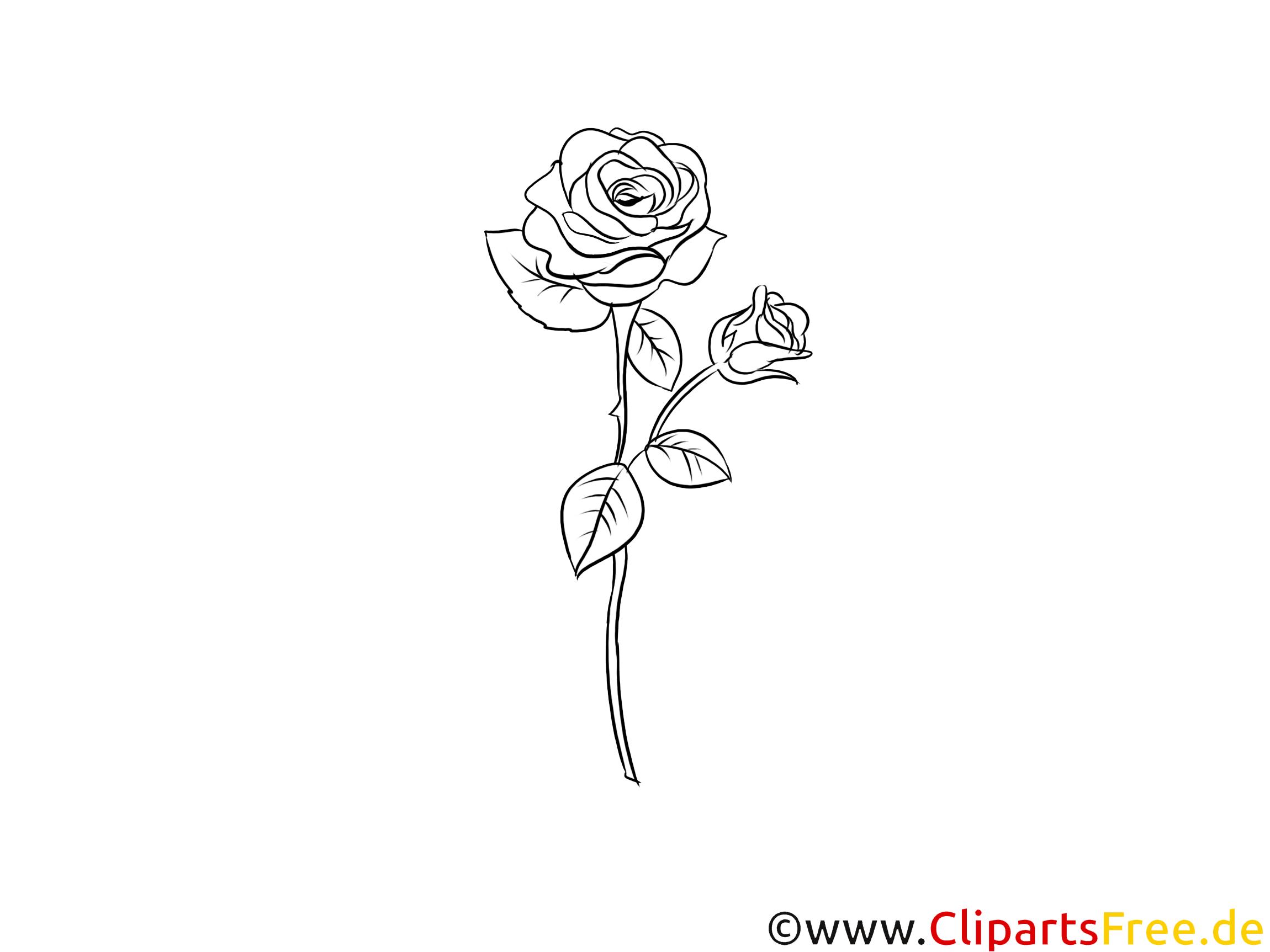 Grafik Rose schwarz weiß