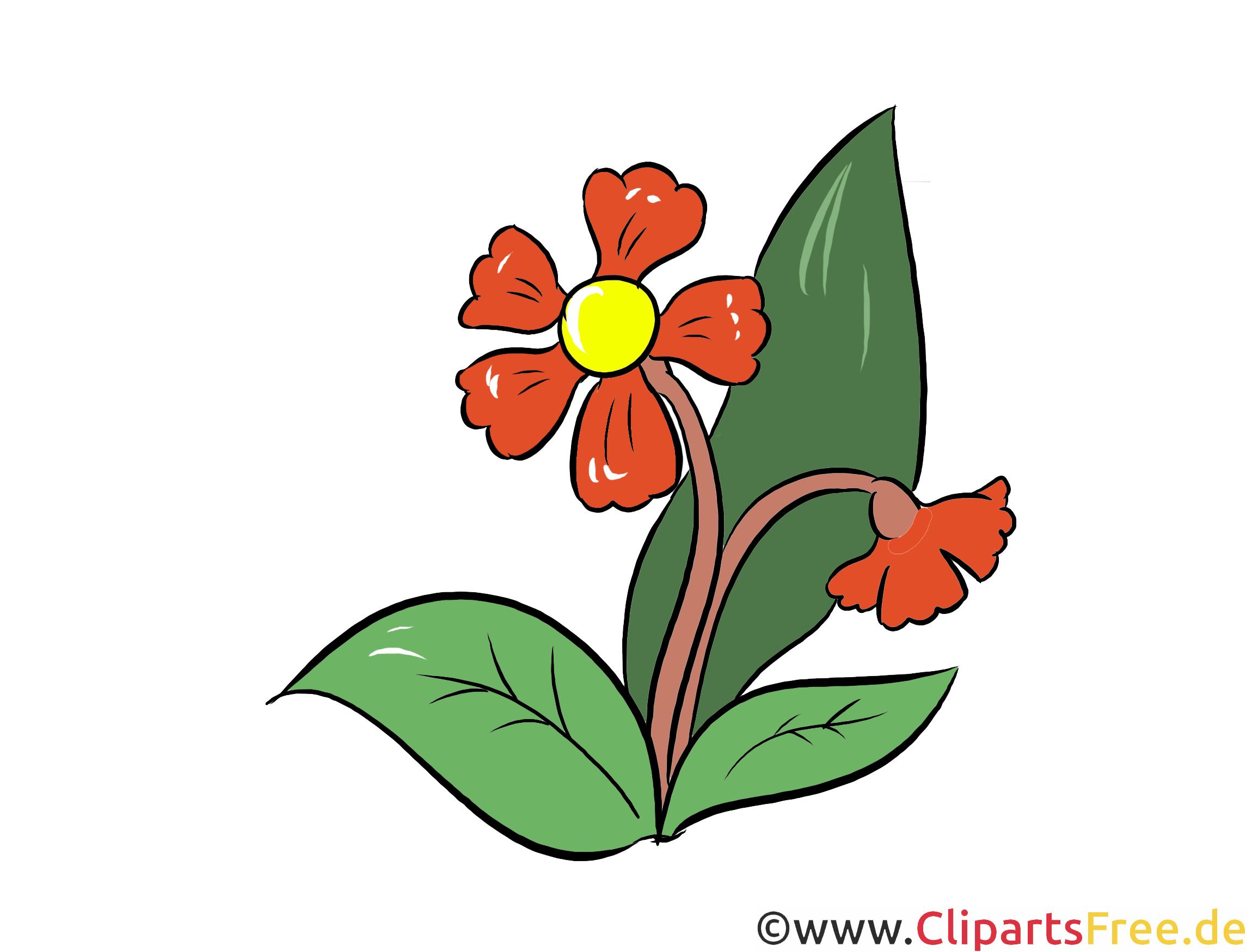 Margerite Clipart, Illustration, Bild kostenlos