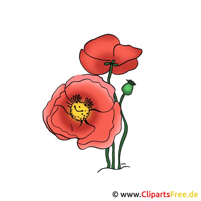 Mohn Bild - Blumen Cliparts gratis
