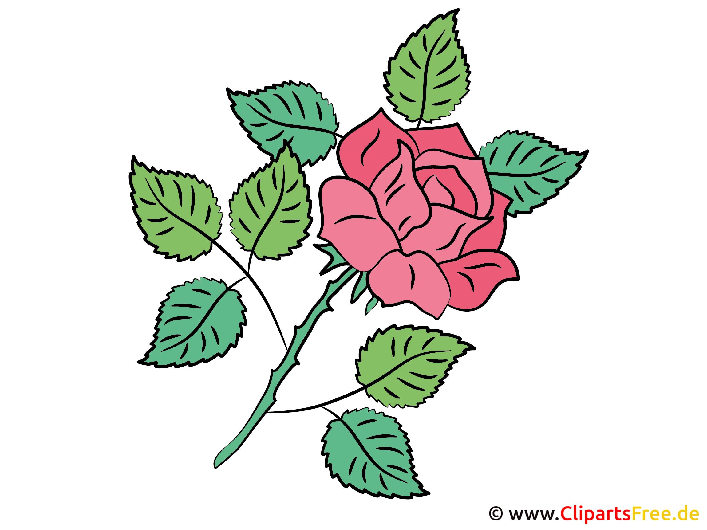 Rose Bild - Cliparts
