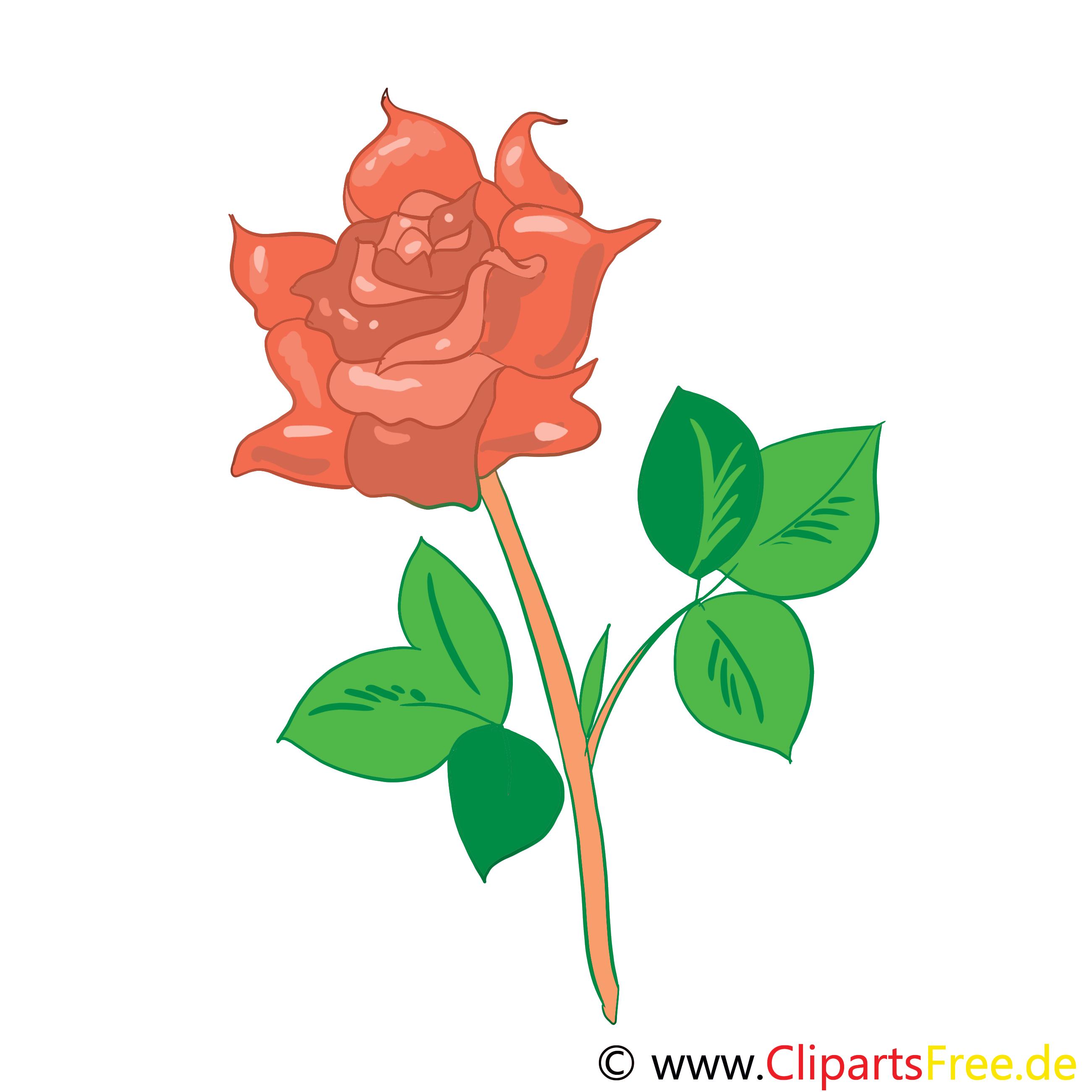 Rose Bild, Clip Art, Grafik, Illustration kostenlos