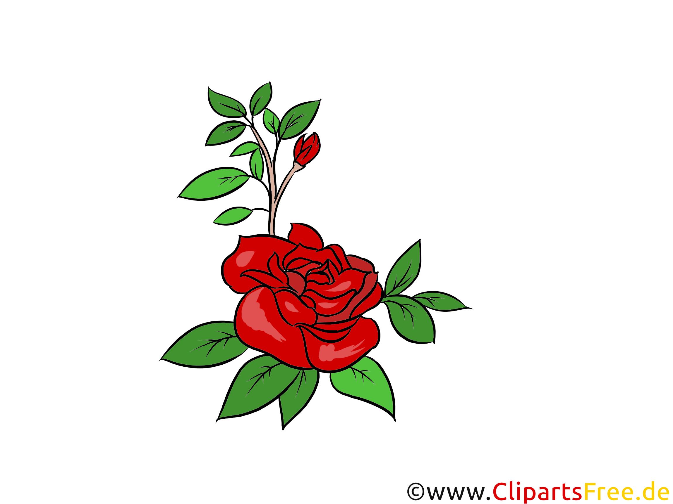 Rose Bild, Grafik, Illustration kostenlos