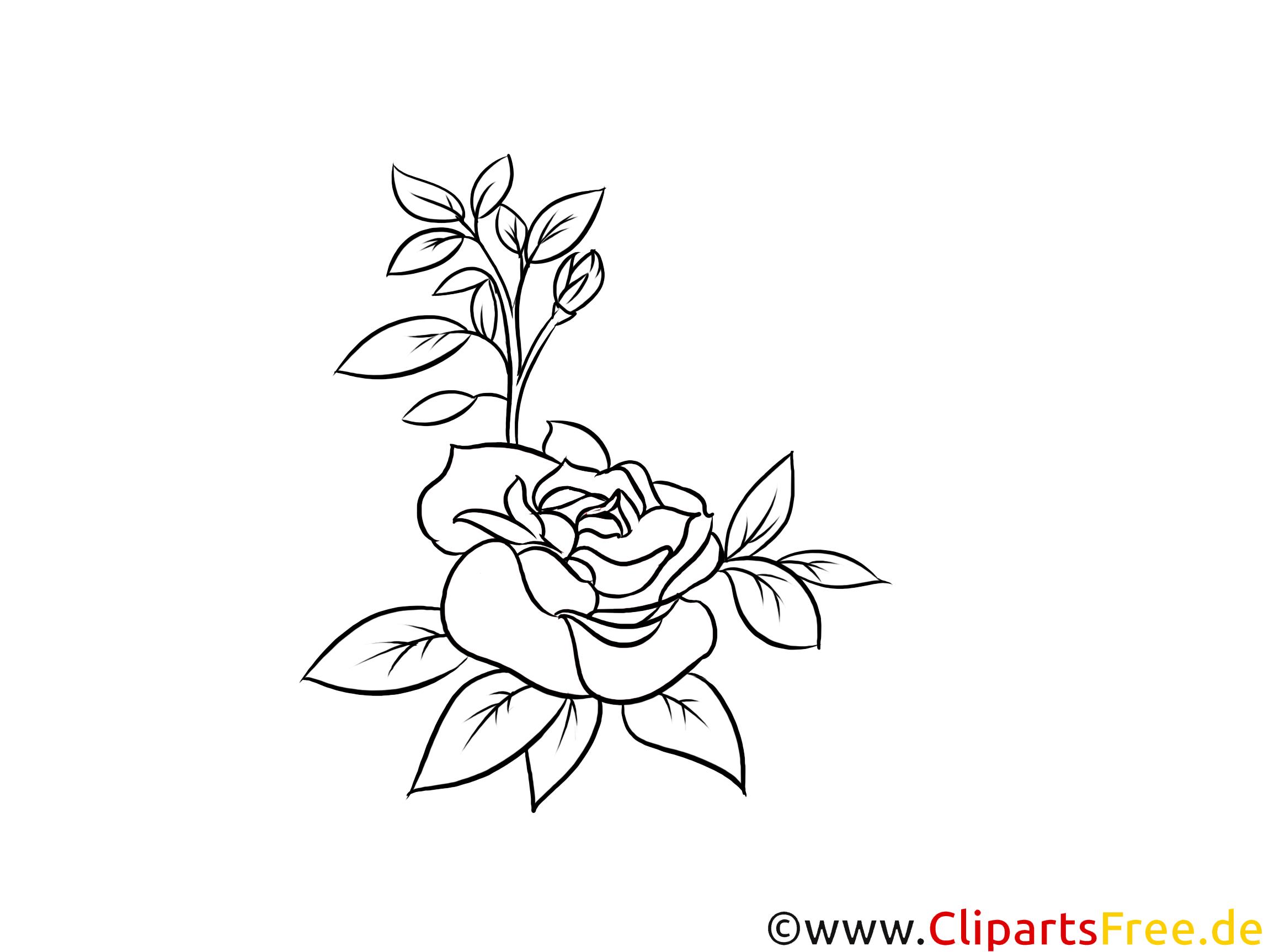 Rose schwarz-weiß Grafik, Bild, Clipart