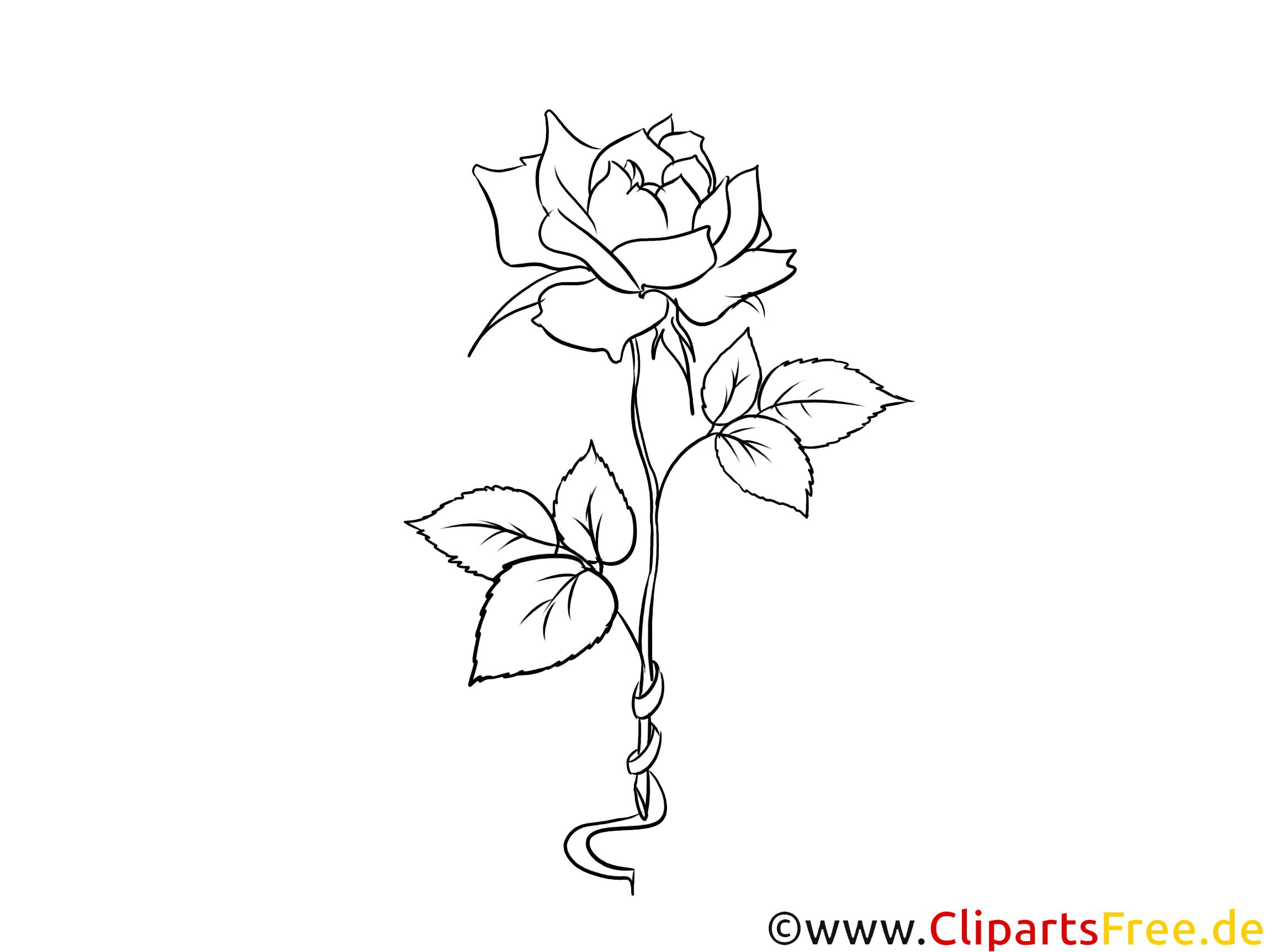 Rose schwarz weiß Clipart, Grafik, Bild