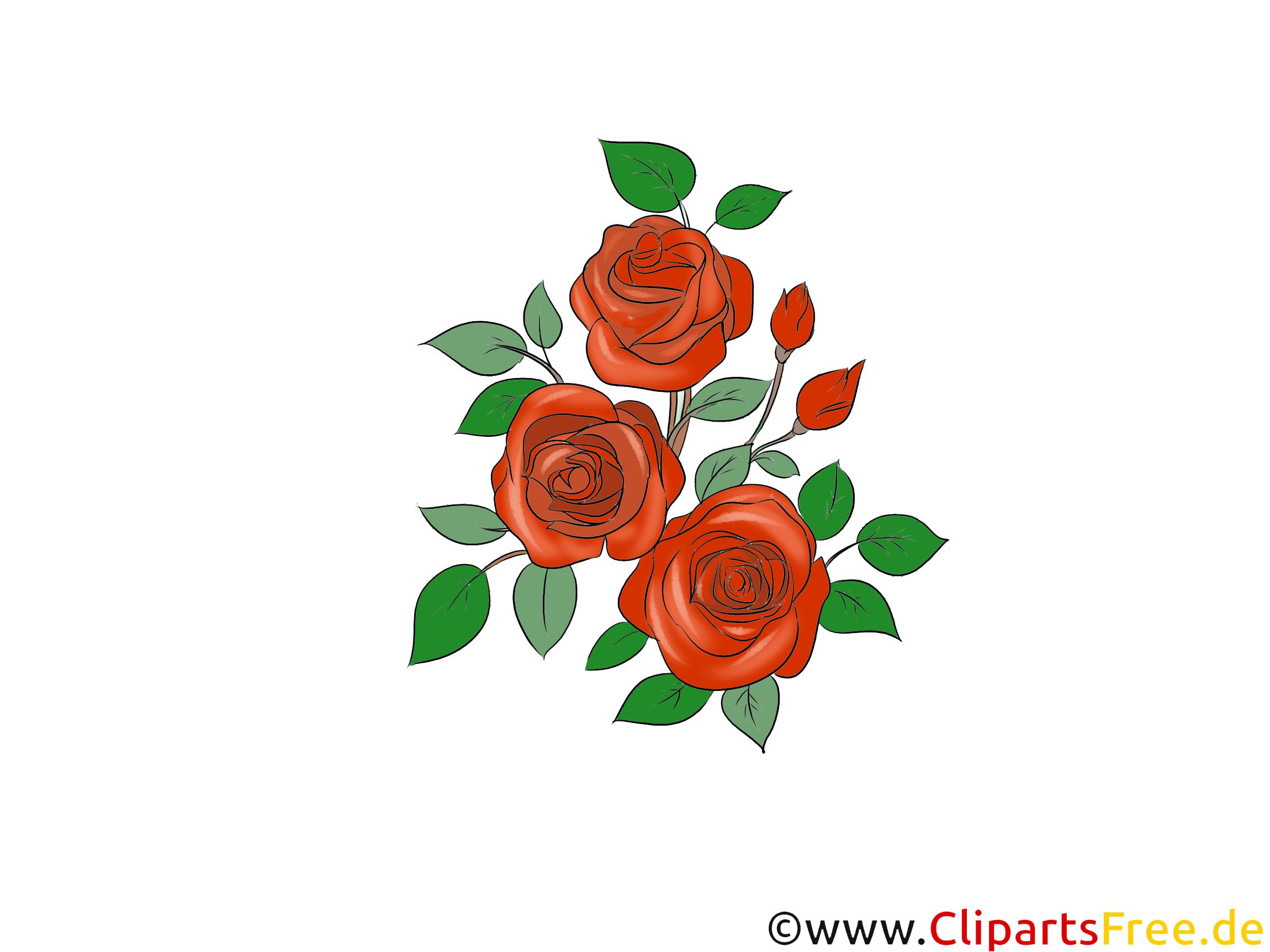Rote Rosen Clipart kostenlos