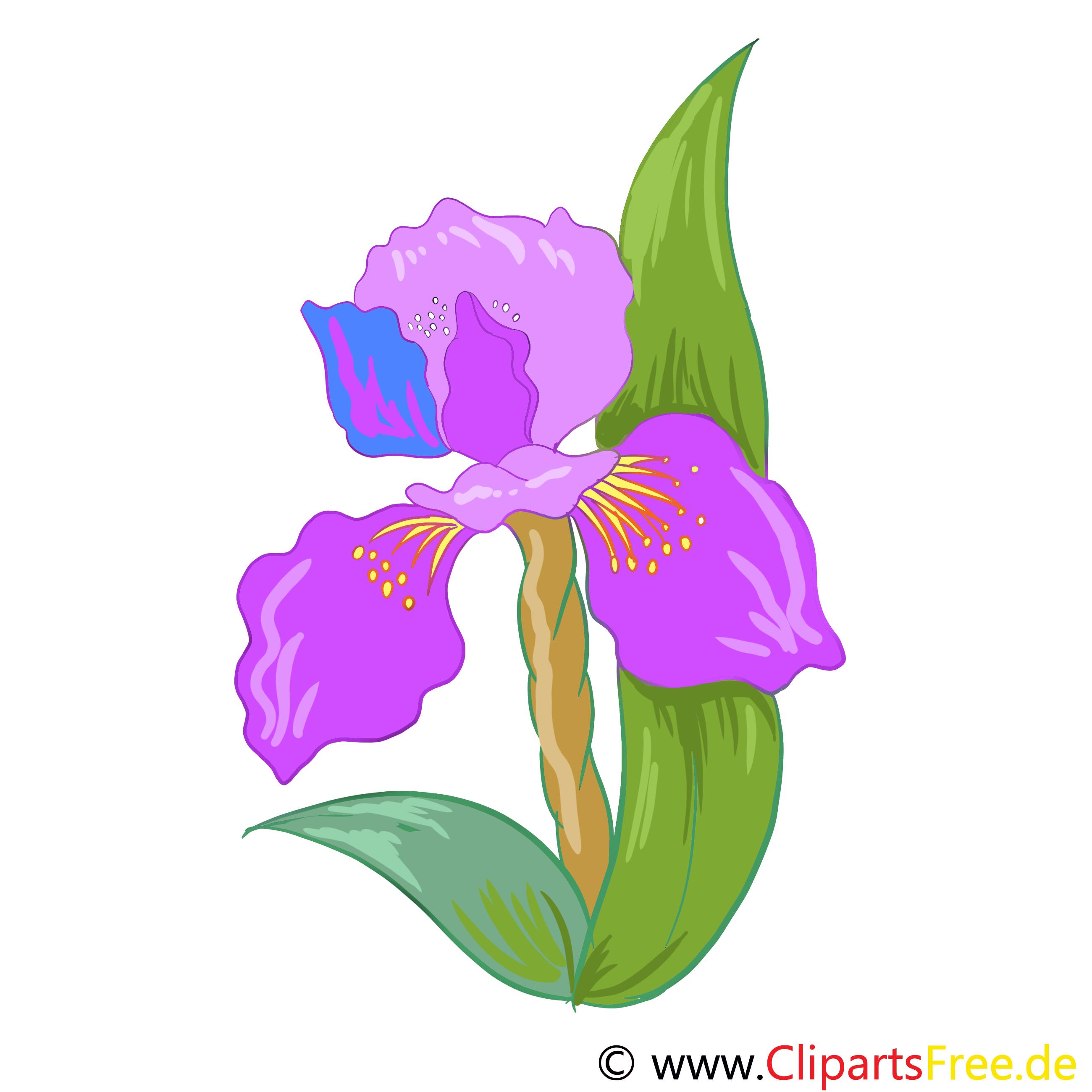 Schwertlilie Bild, Clip Art, Grafik, Illustration kostenlos
