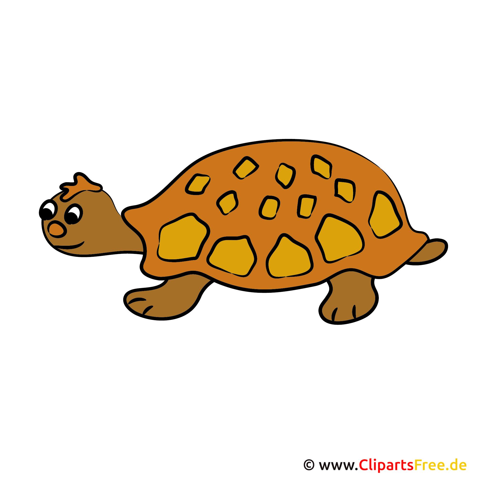 Schildkröte Clipart