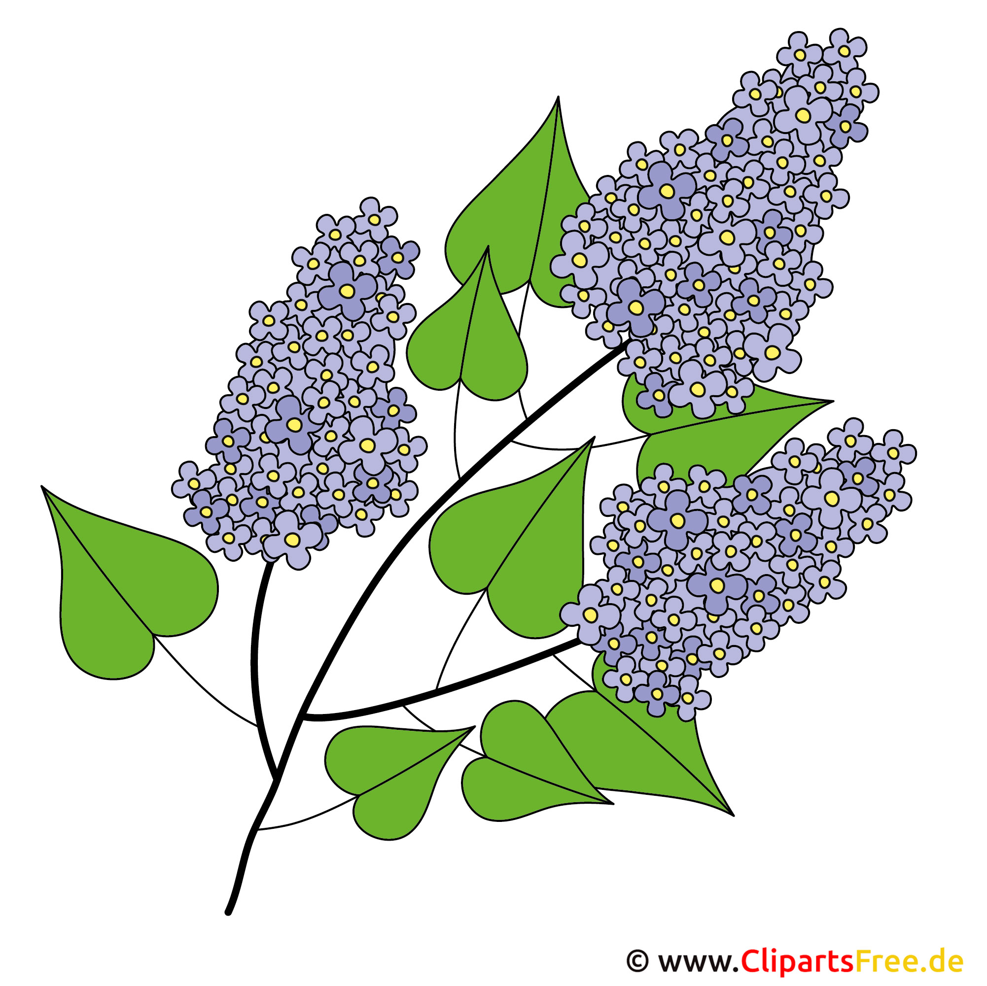 Fliederbusch Bild - Clipart Frühling