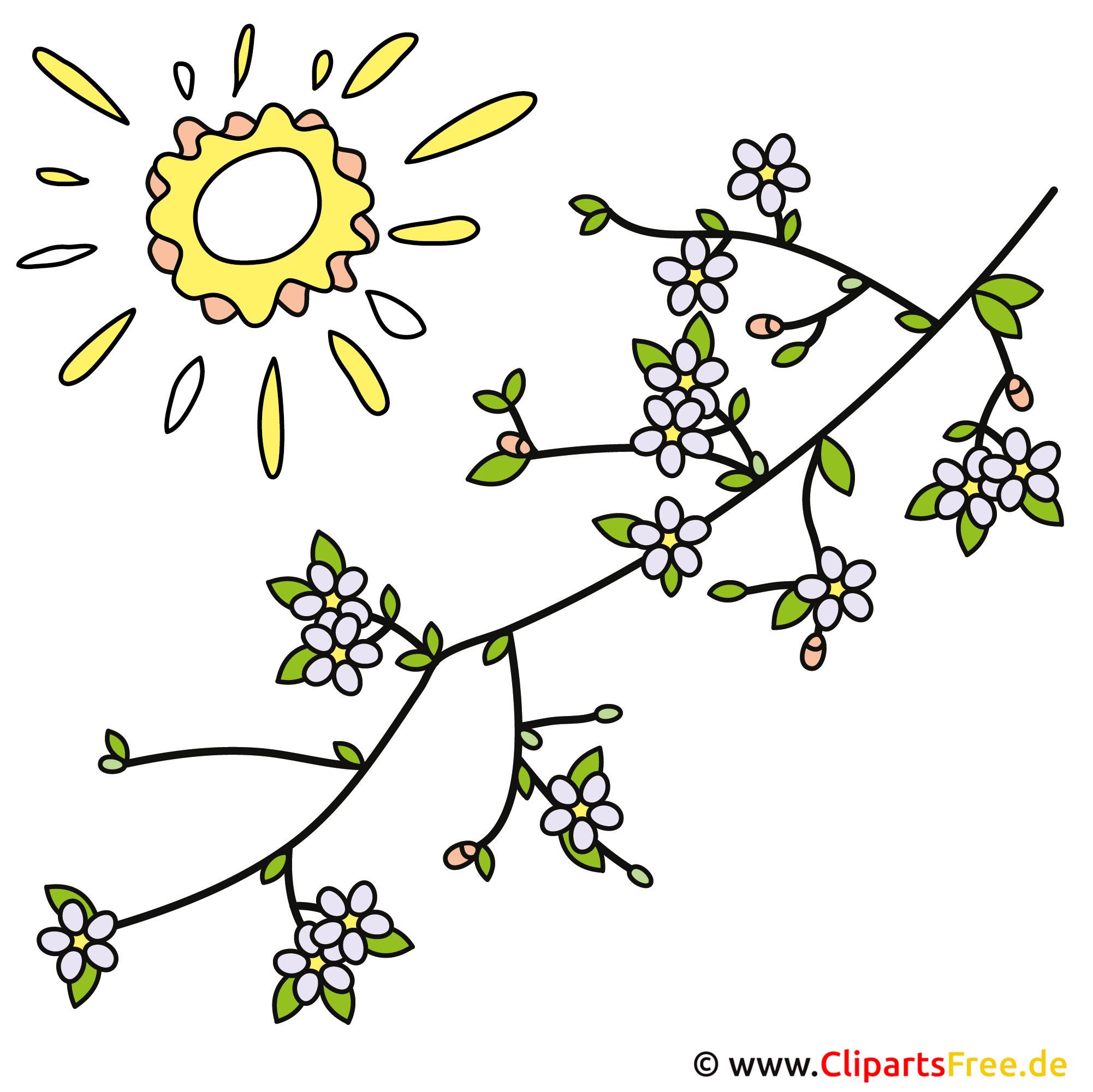 Frühling Bild kostenlos Baumzweige mit Blumen