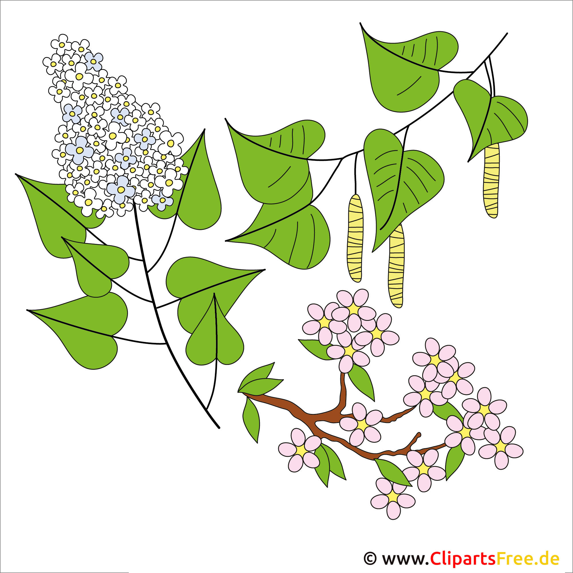 Frühling Cliparts kostenlos - Birke