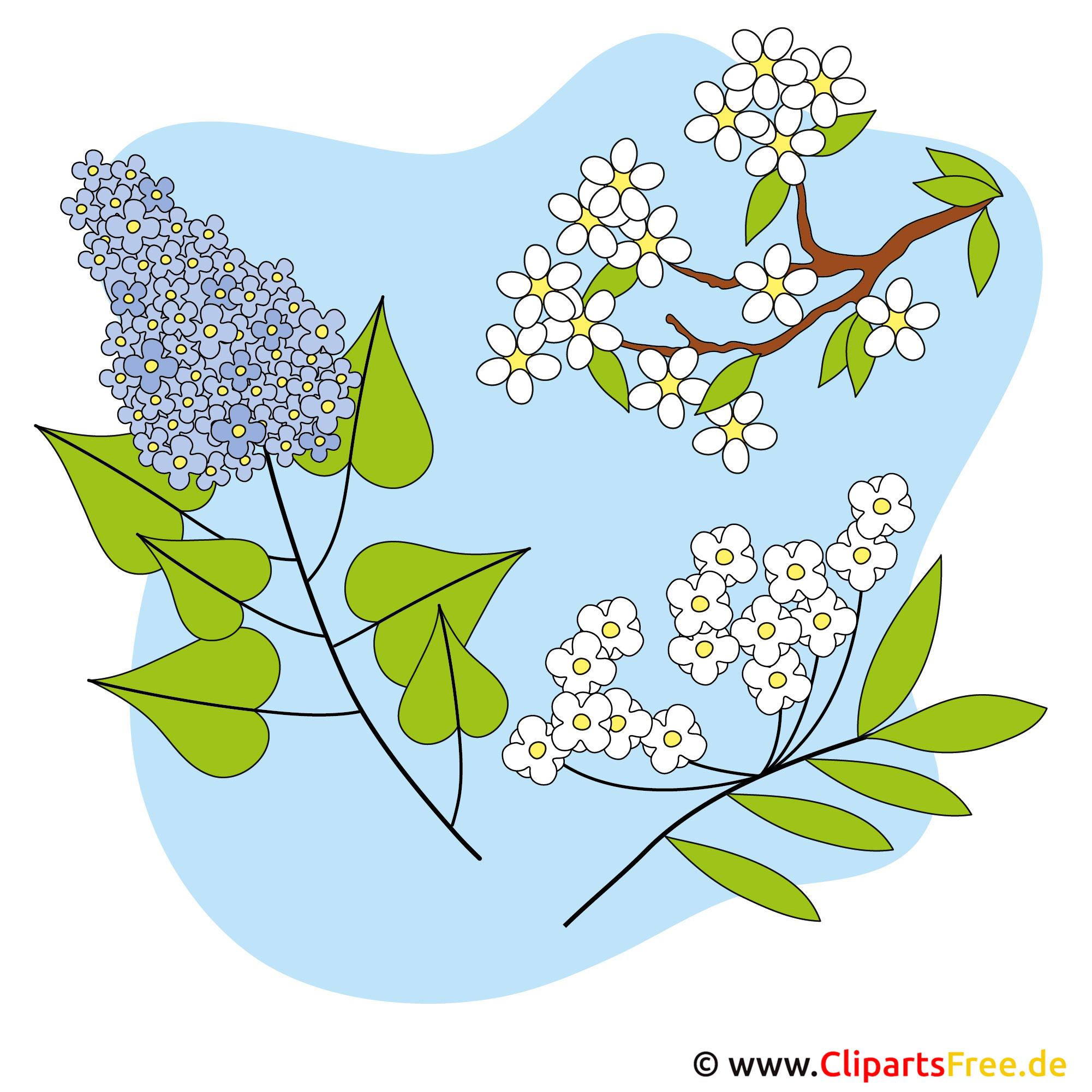 Frühlingsblumen Bild - Clipart kostenlos