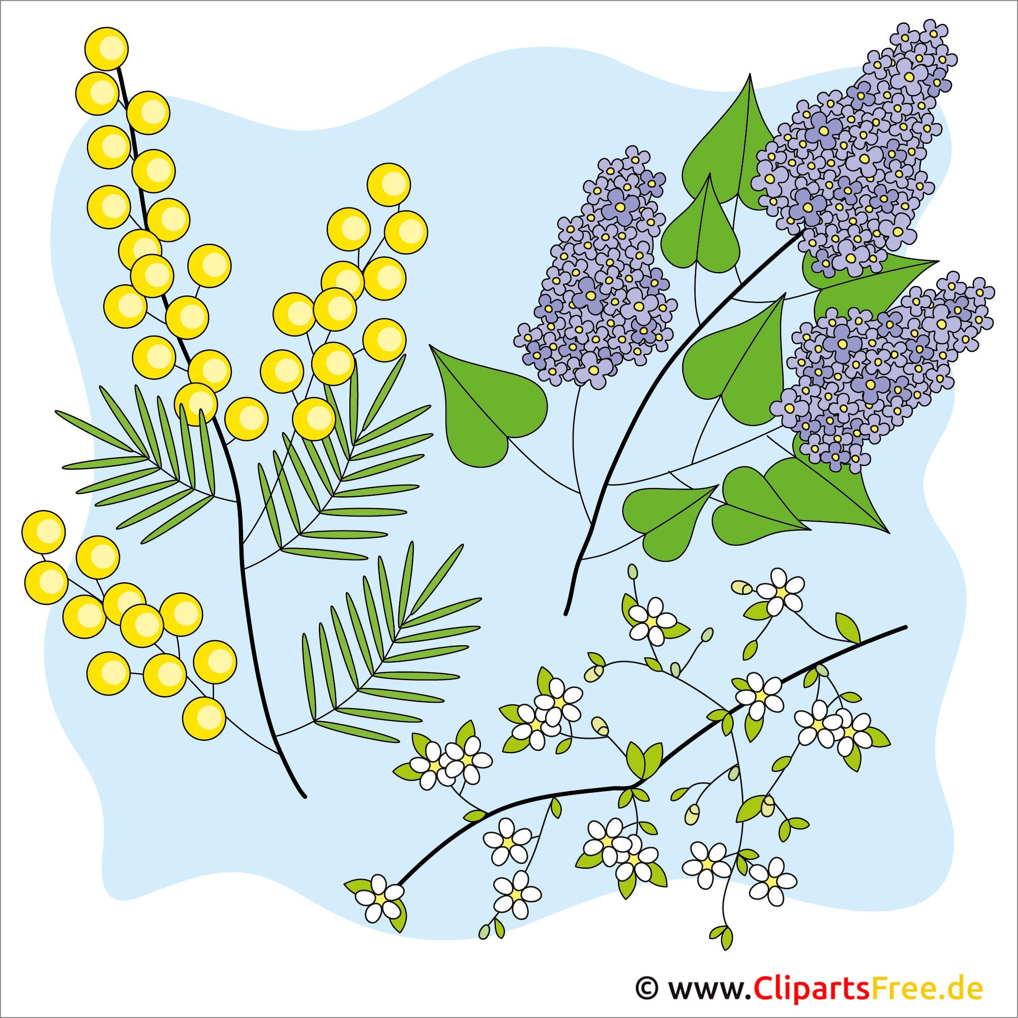 Pflanzen Bilder kostenlos