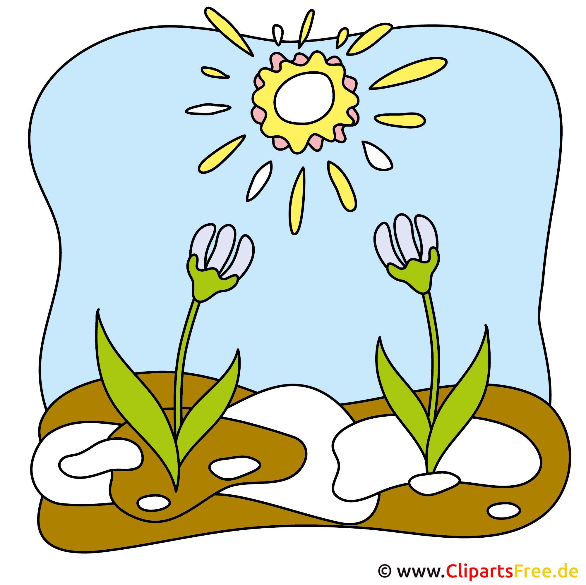 Stiefmuetterchen Bild - Frühling Bilder kostenlos