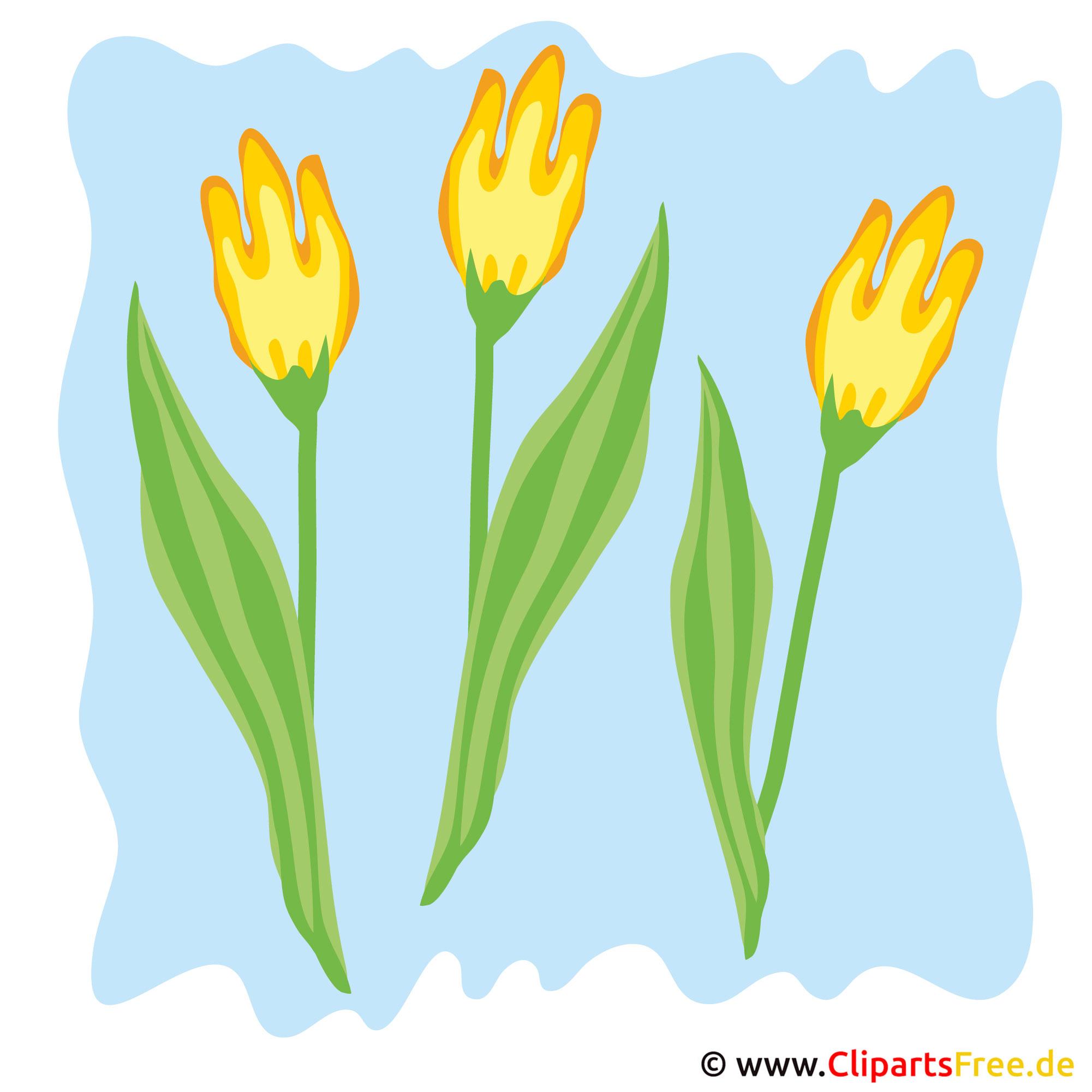 Tulpen Bild - Frühling Cliparts kostenlos