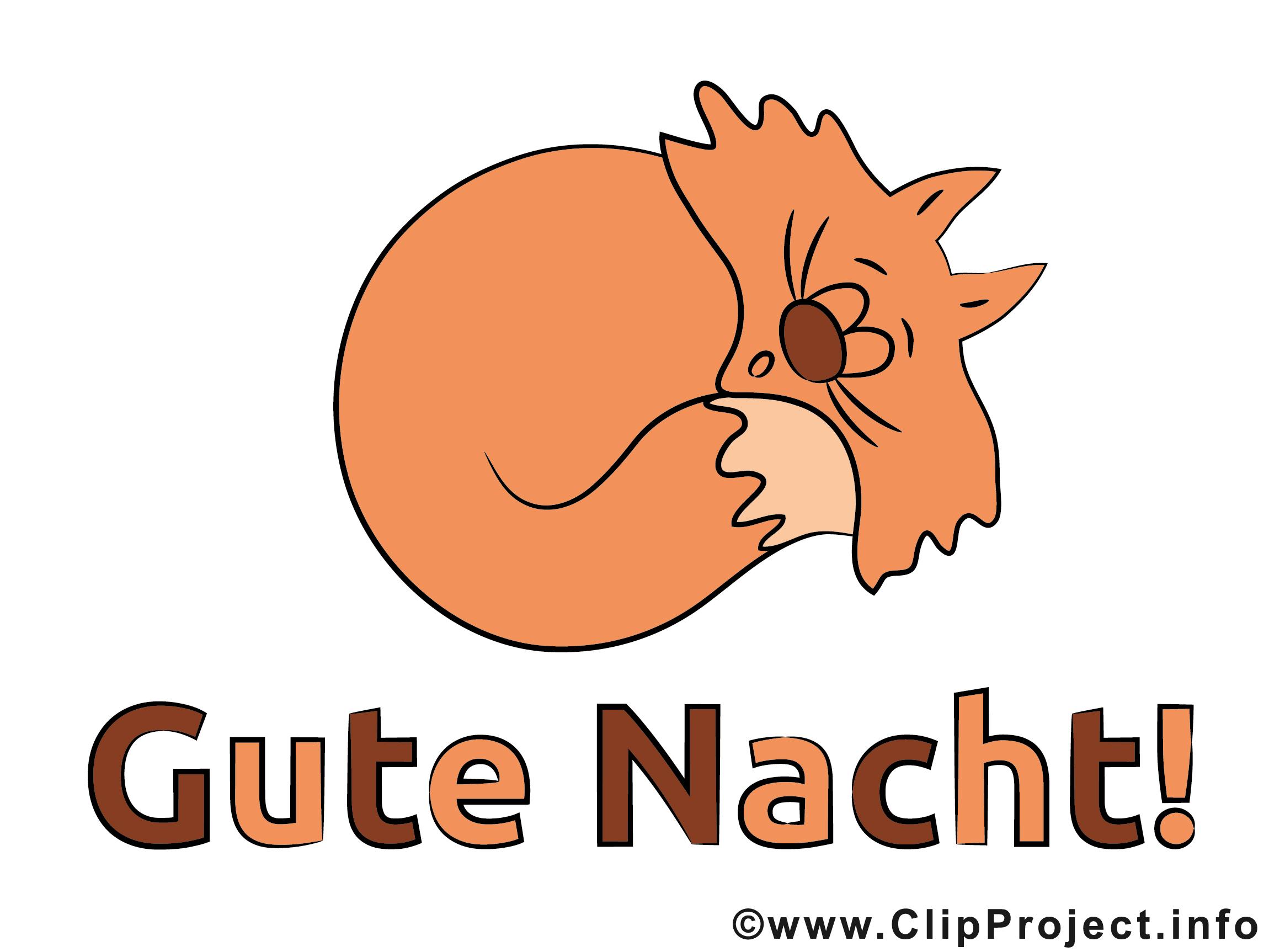Schlafende Katze Bild - Gute Nacht Bilder