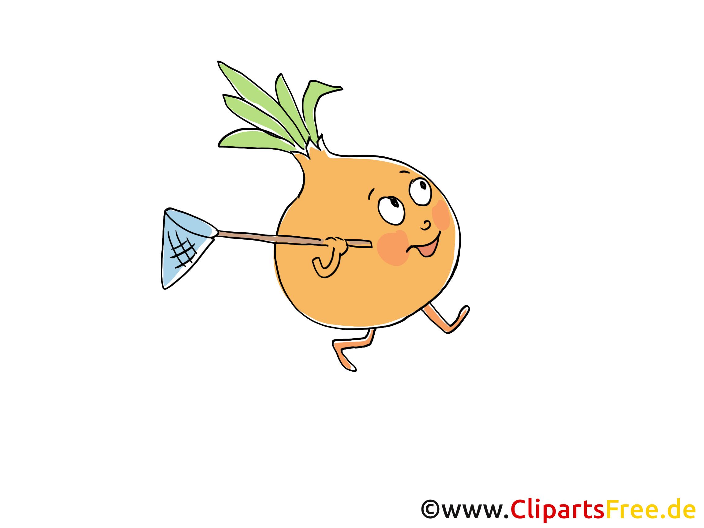 Zwiebel Clip Art, Illustration, Bild, Cartoon