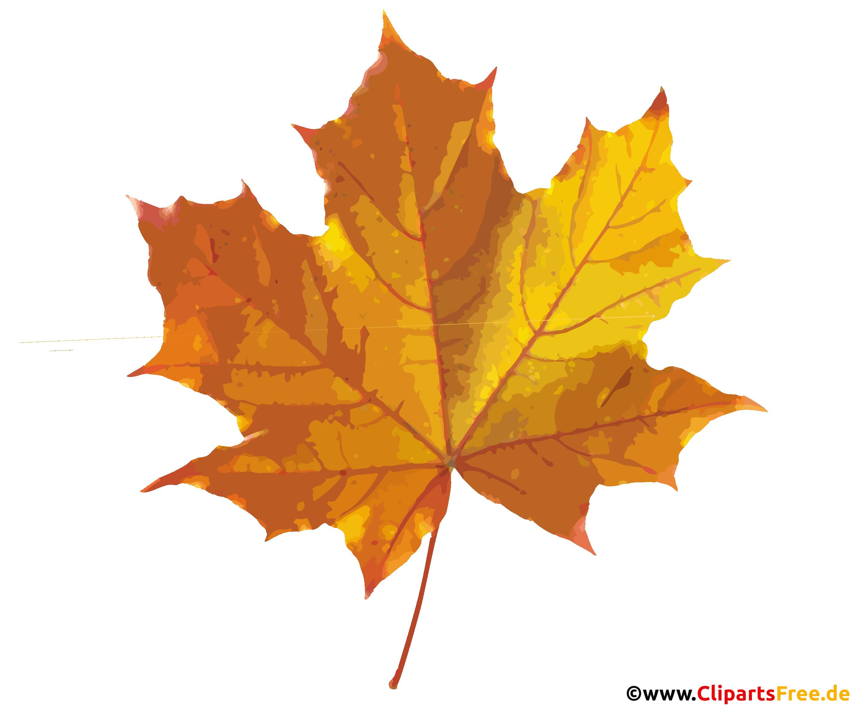 Ahornblatt im Herbst Bild, Grafik, Clip Art