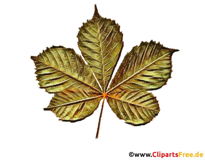 Blatt Kastanie Zeichnung in Farbe - Cliparts für Schule