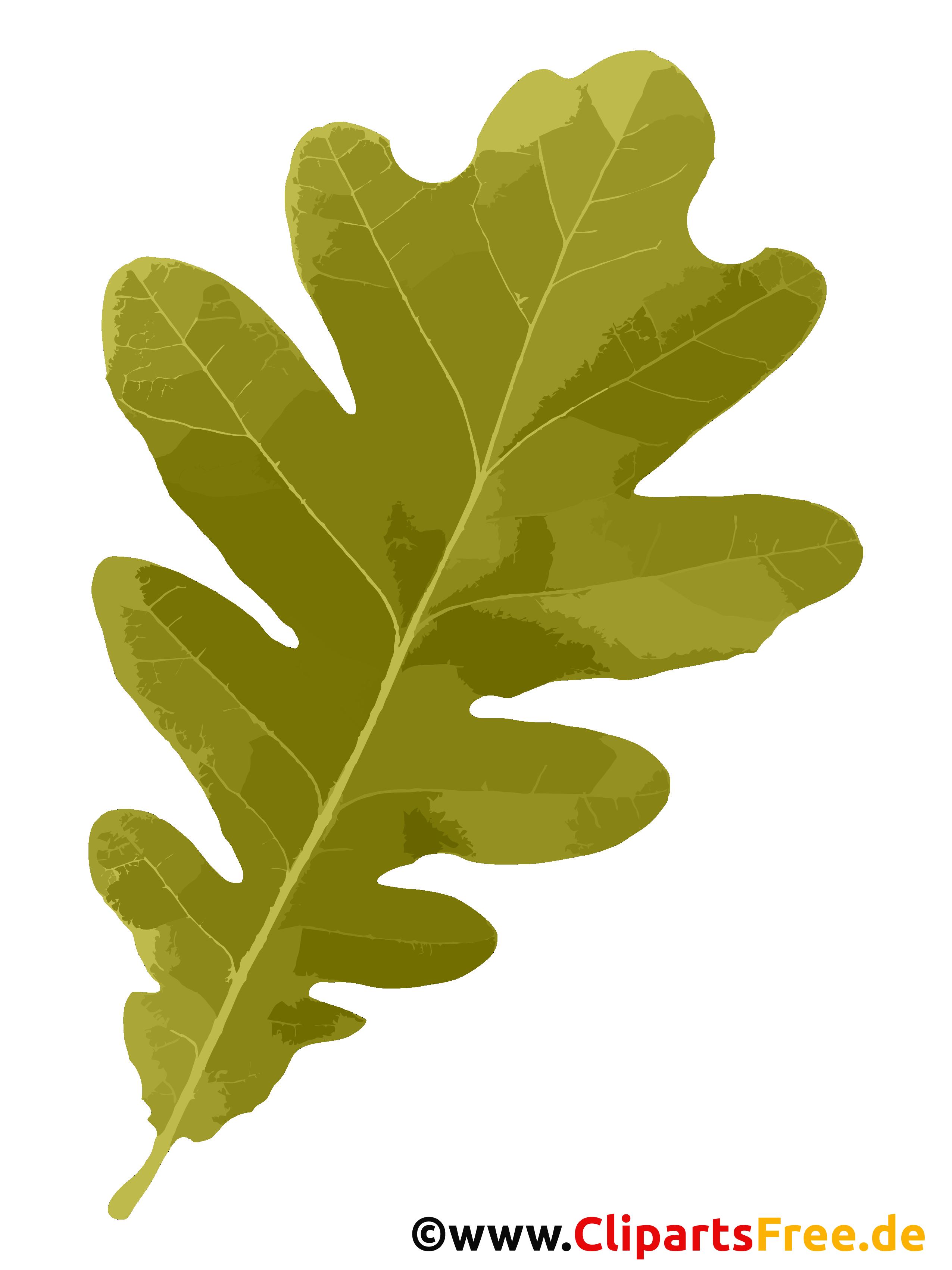 Eichenblatt im Herbst Clipart kostenlos
