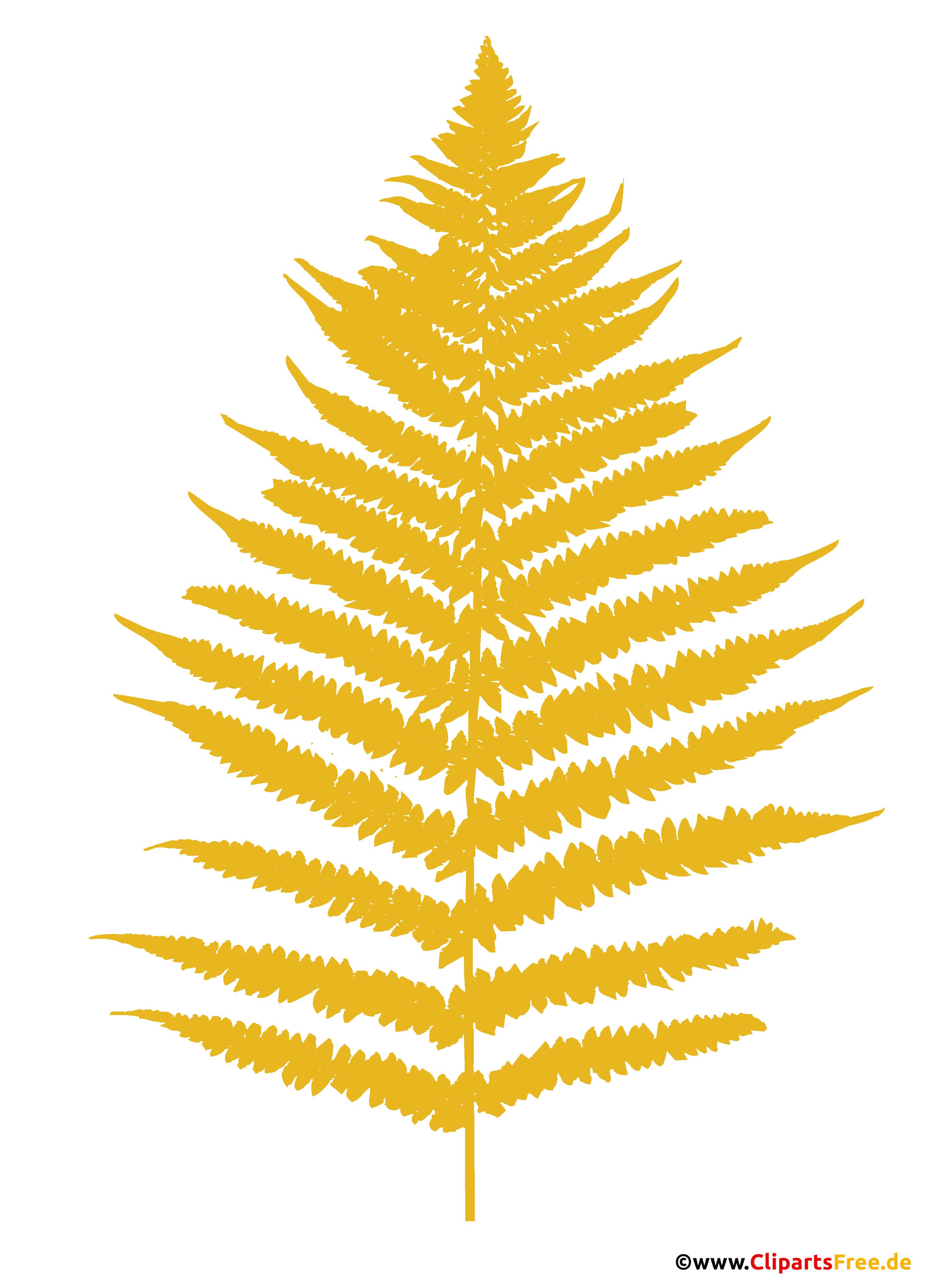 Farn Clipart - Cliparts zum Thema Botanik