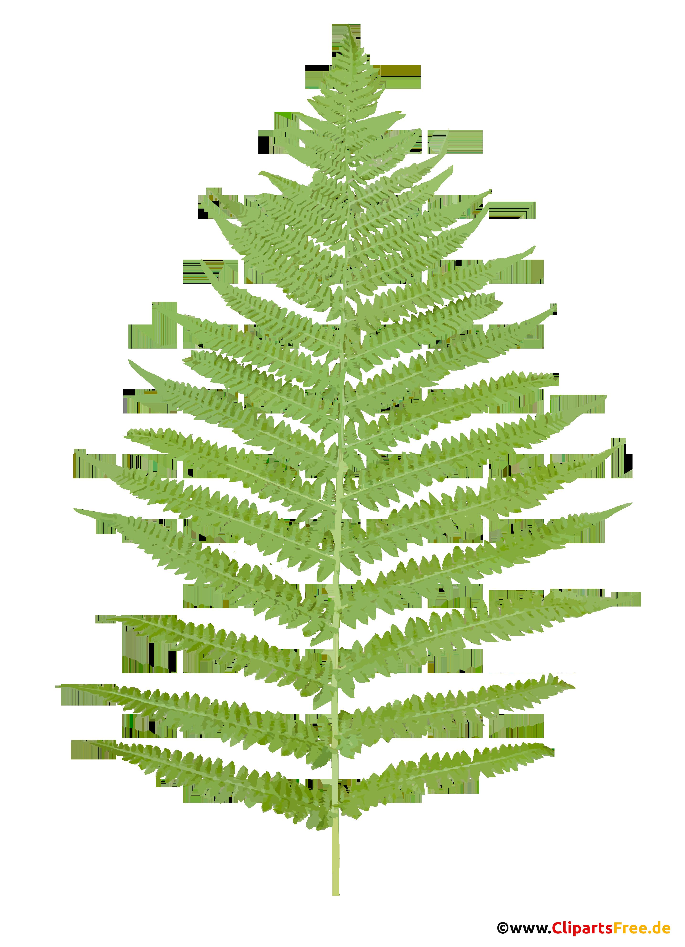 Farnkraut Clipart - Botanische Cliparts, Bilder