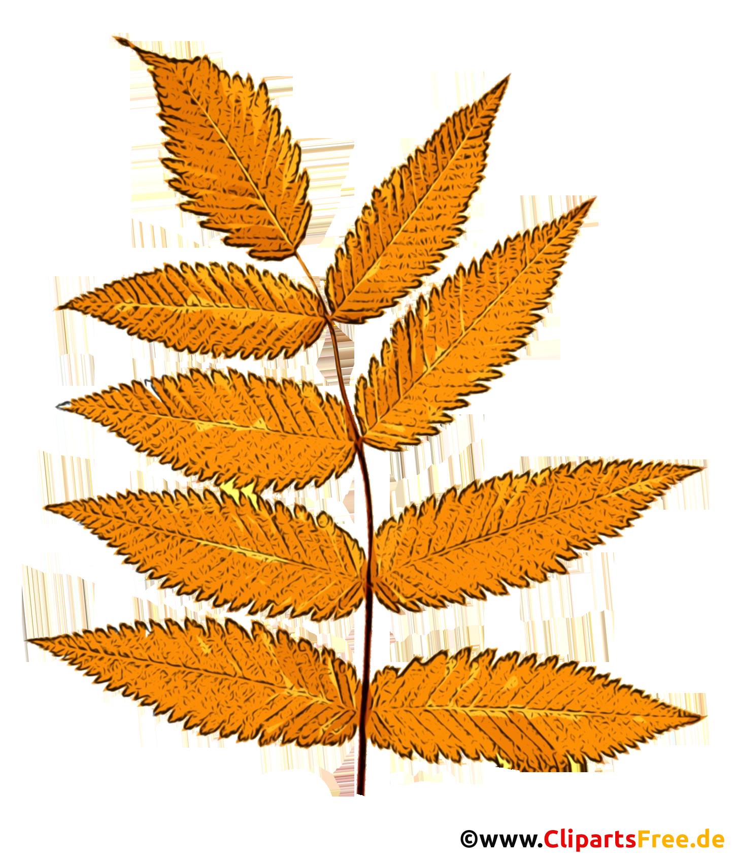 Gelbe Eberescheblätter - Herbst Illustrationen kostenlos