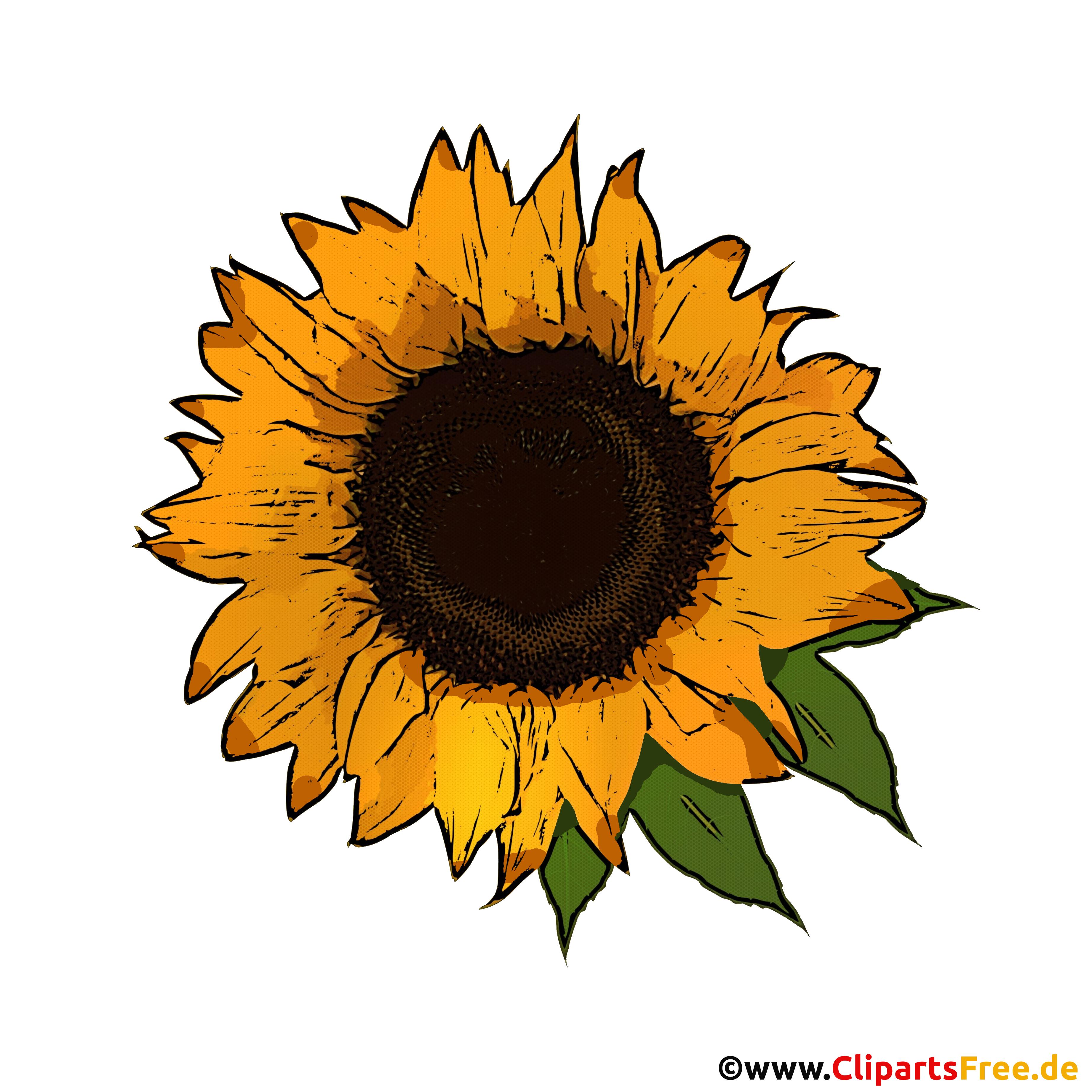 Gelbe Sonnenblume mit grünen Blättern Bild PNG