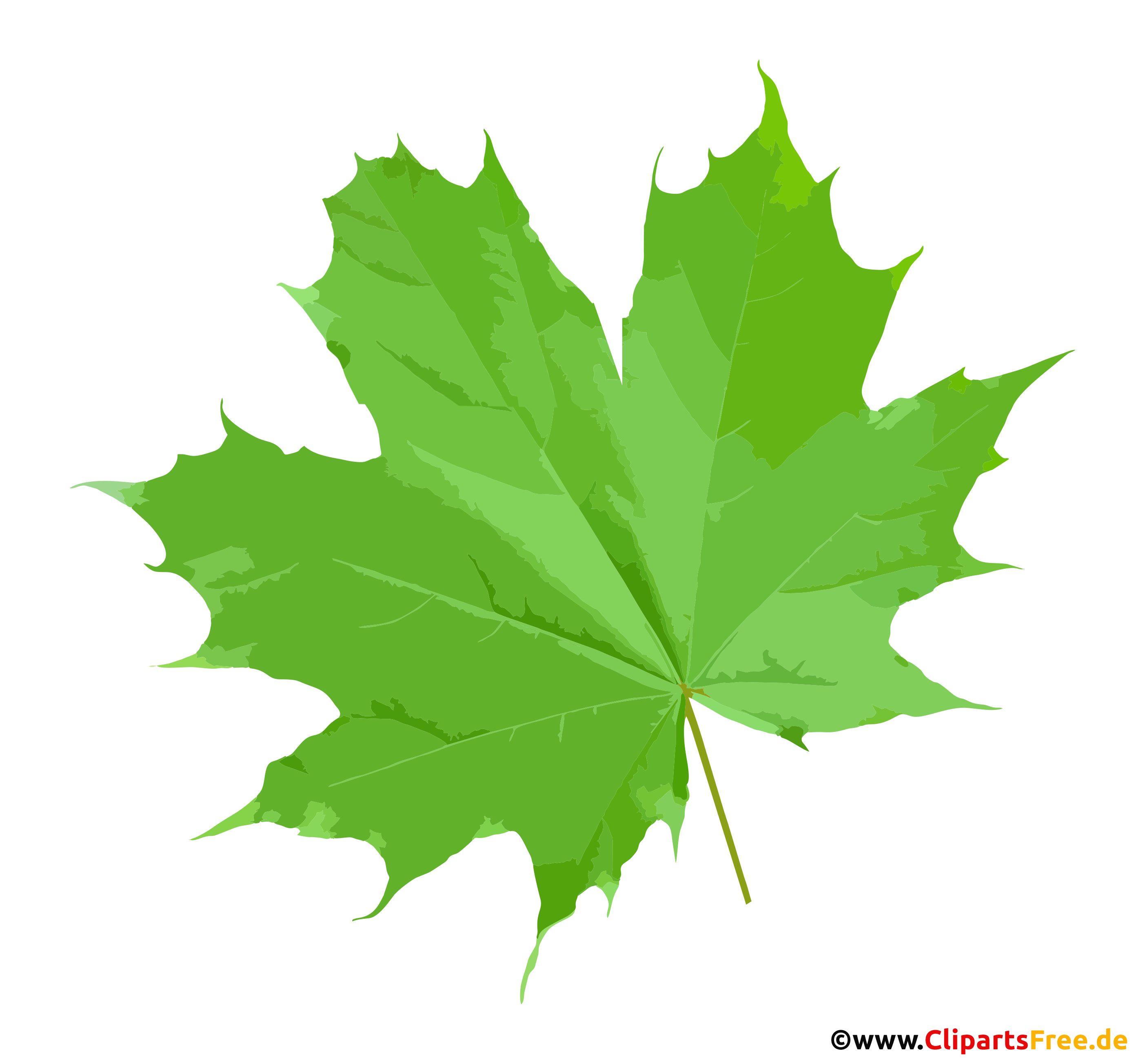 Grünes Ahornblatt PNG Clipart